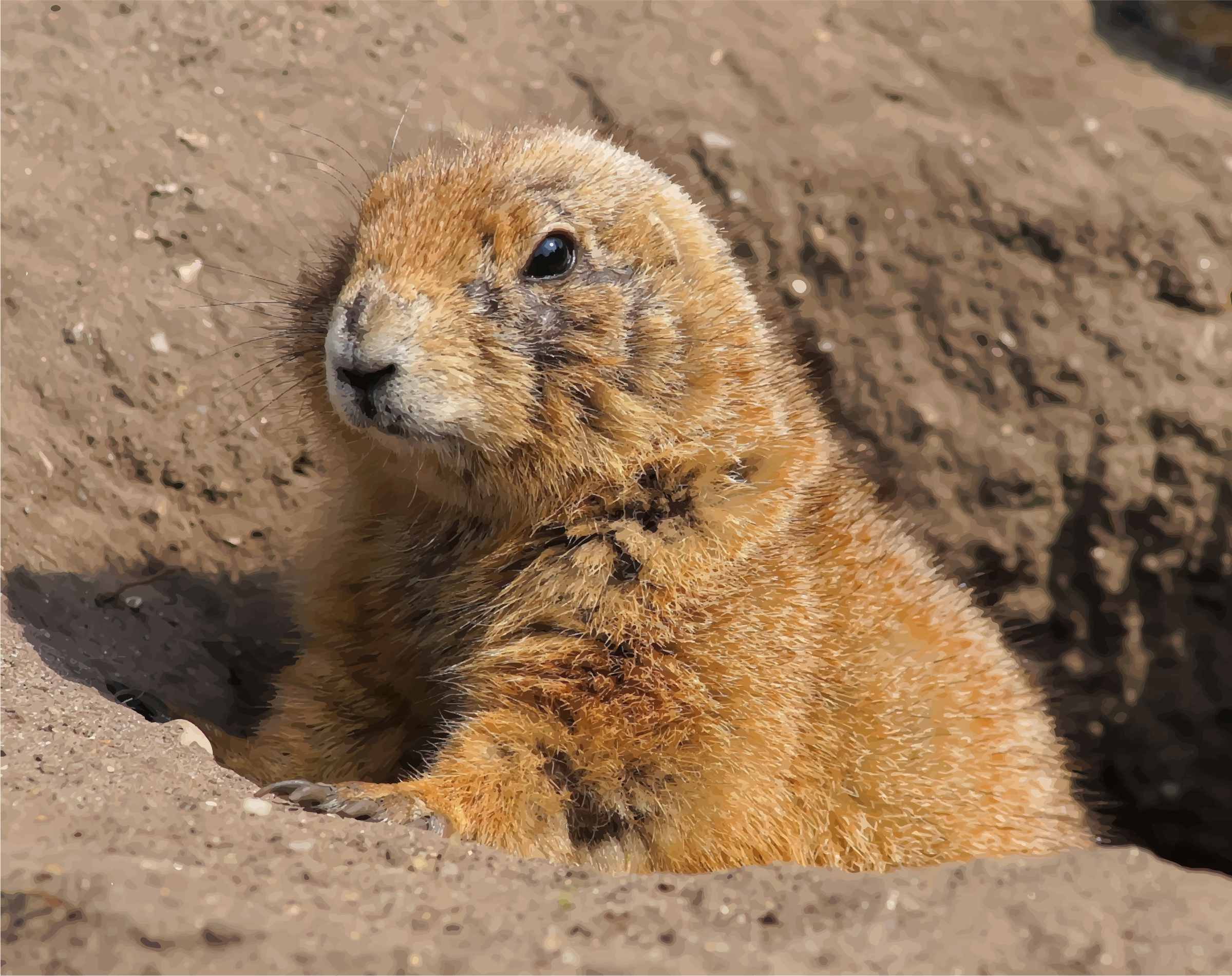 Prairie Dog by GDJ