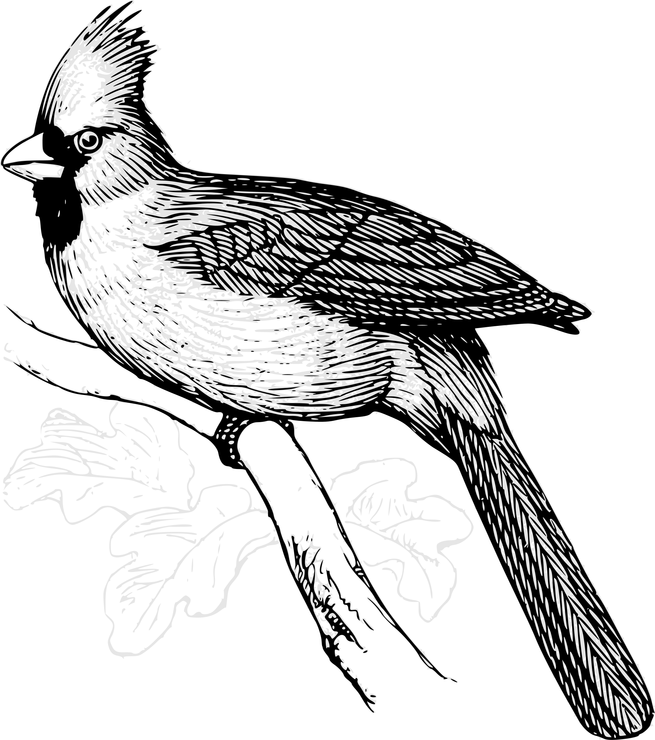 Line Art Birds : Clipart cardinal bird line art