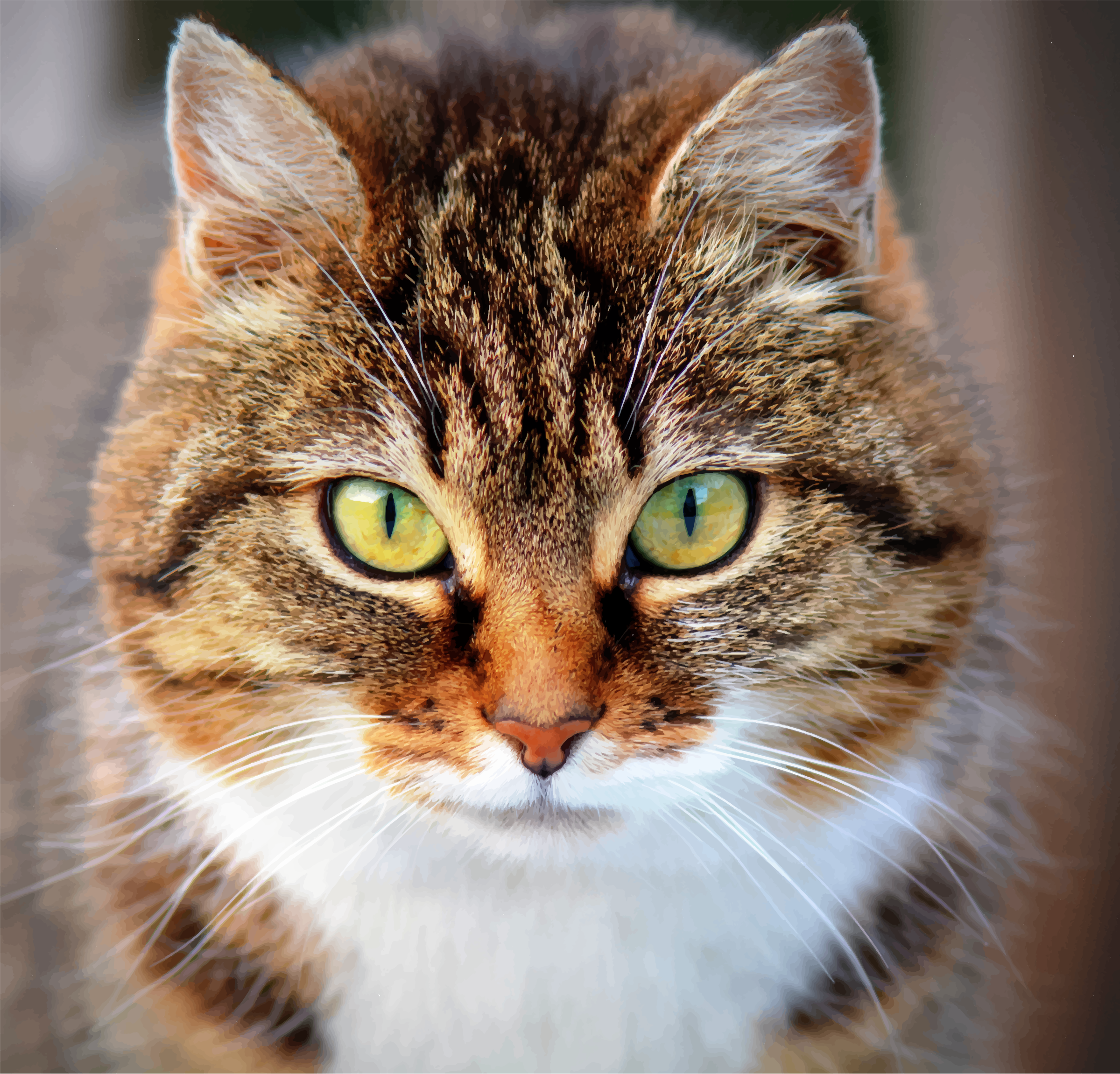 https://openclipart.org/image/2400px/svg_to_png/220591/Innocent-Cat.png