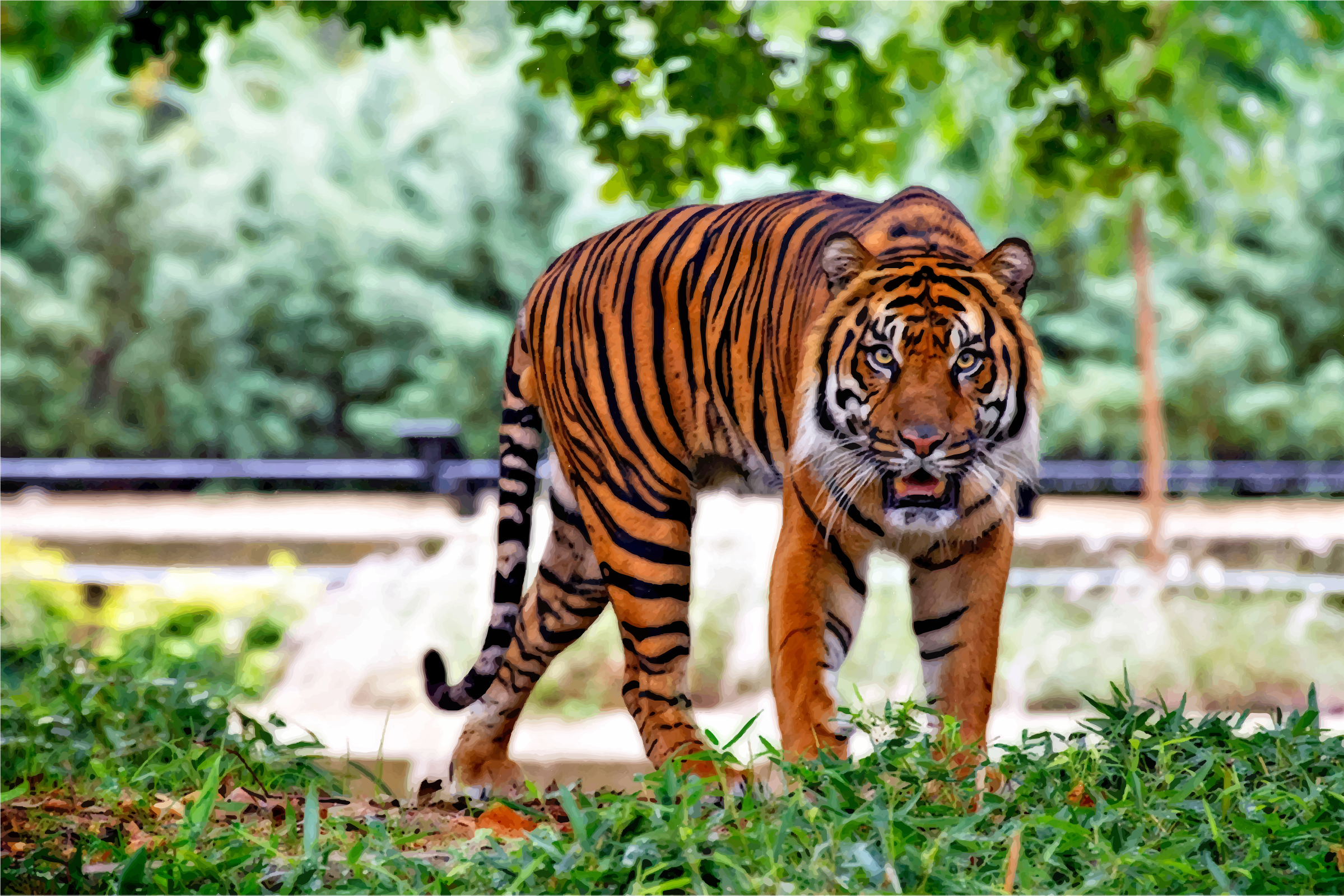 Sumatran Tiger by GDJ