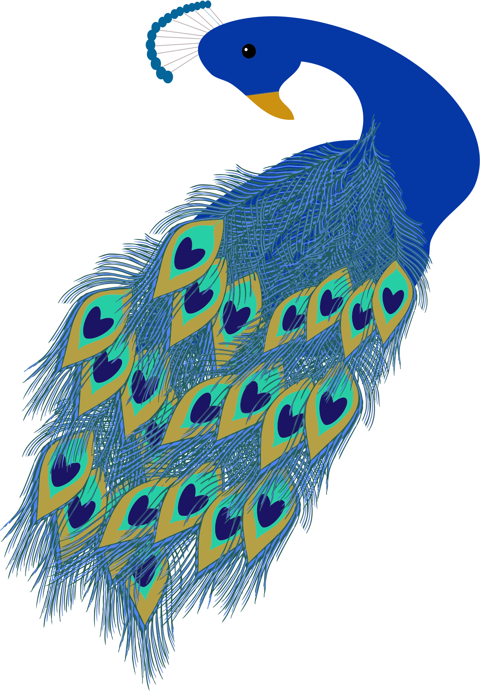 Peacock Illustration by GDJ