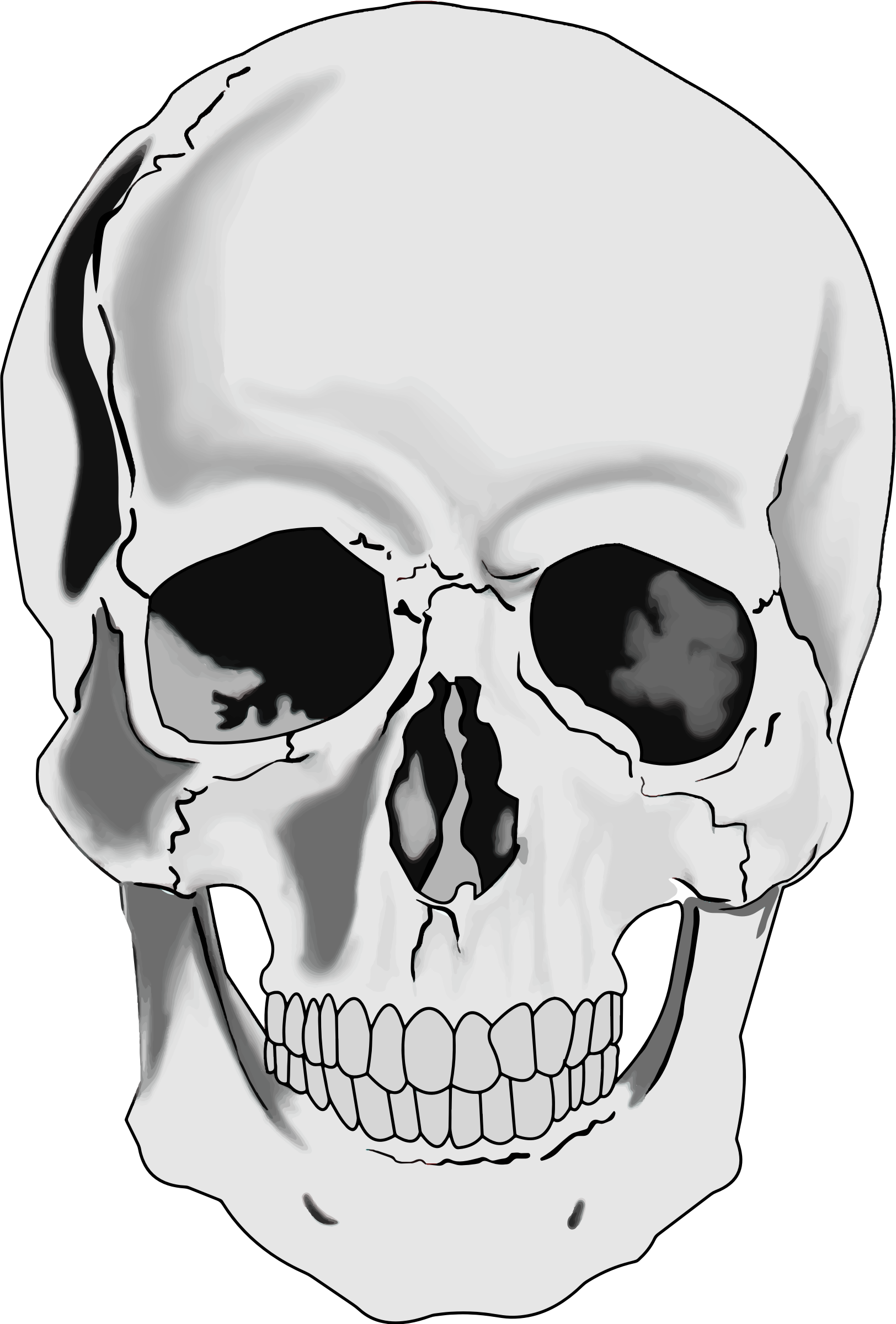clipart realistic human skull rh openclipart org skull clipart black and white skull clipart pirate