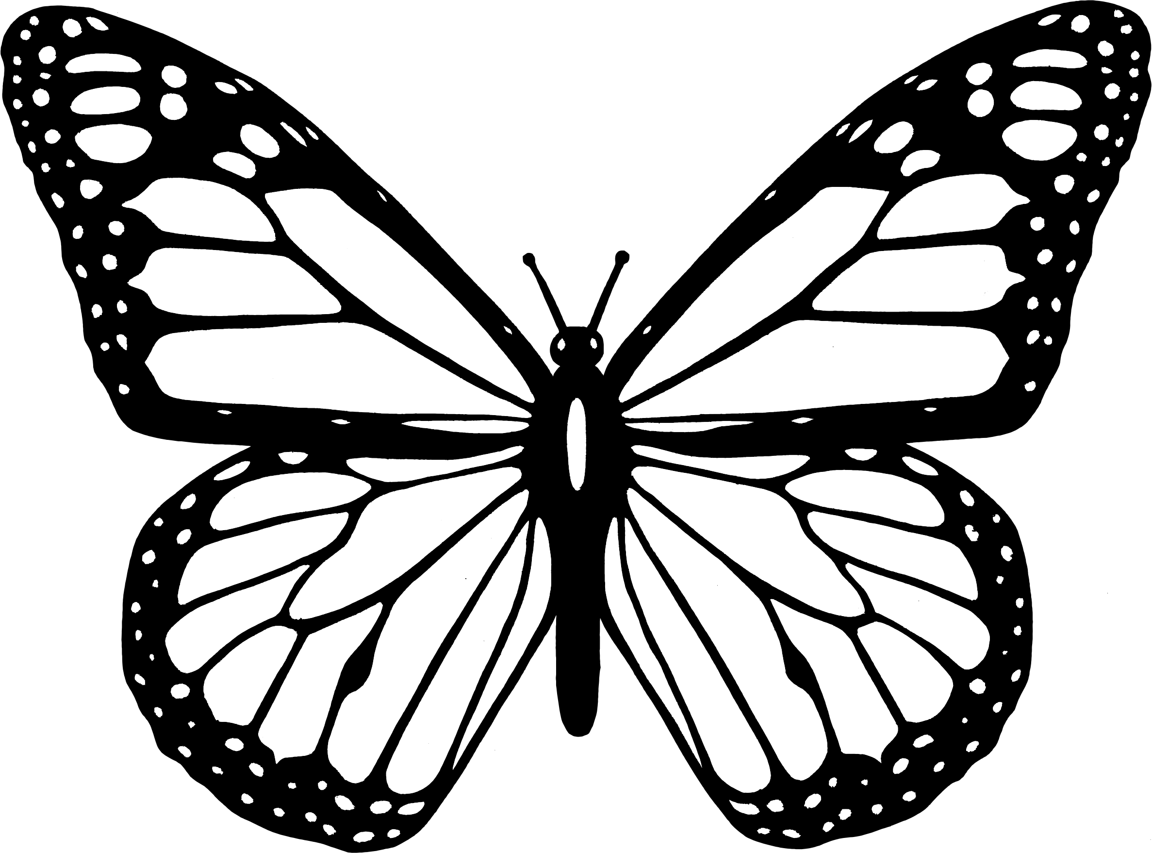 Black And White Butterfly by GDJ