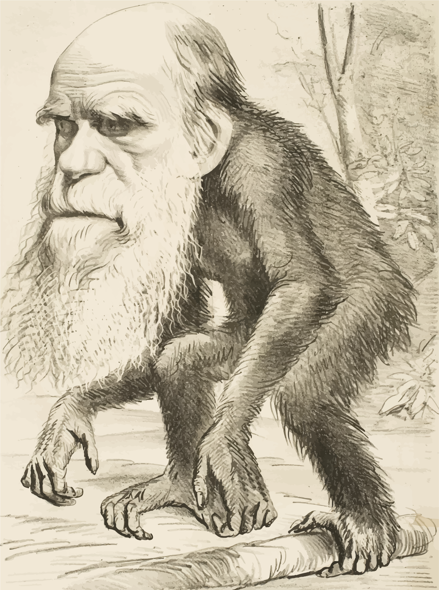 Editorial Cartoon Depicting Charles Darwin As An Ape 1871 by GDJ