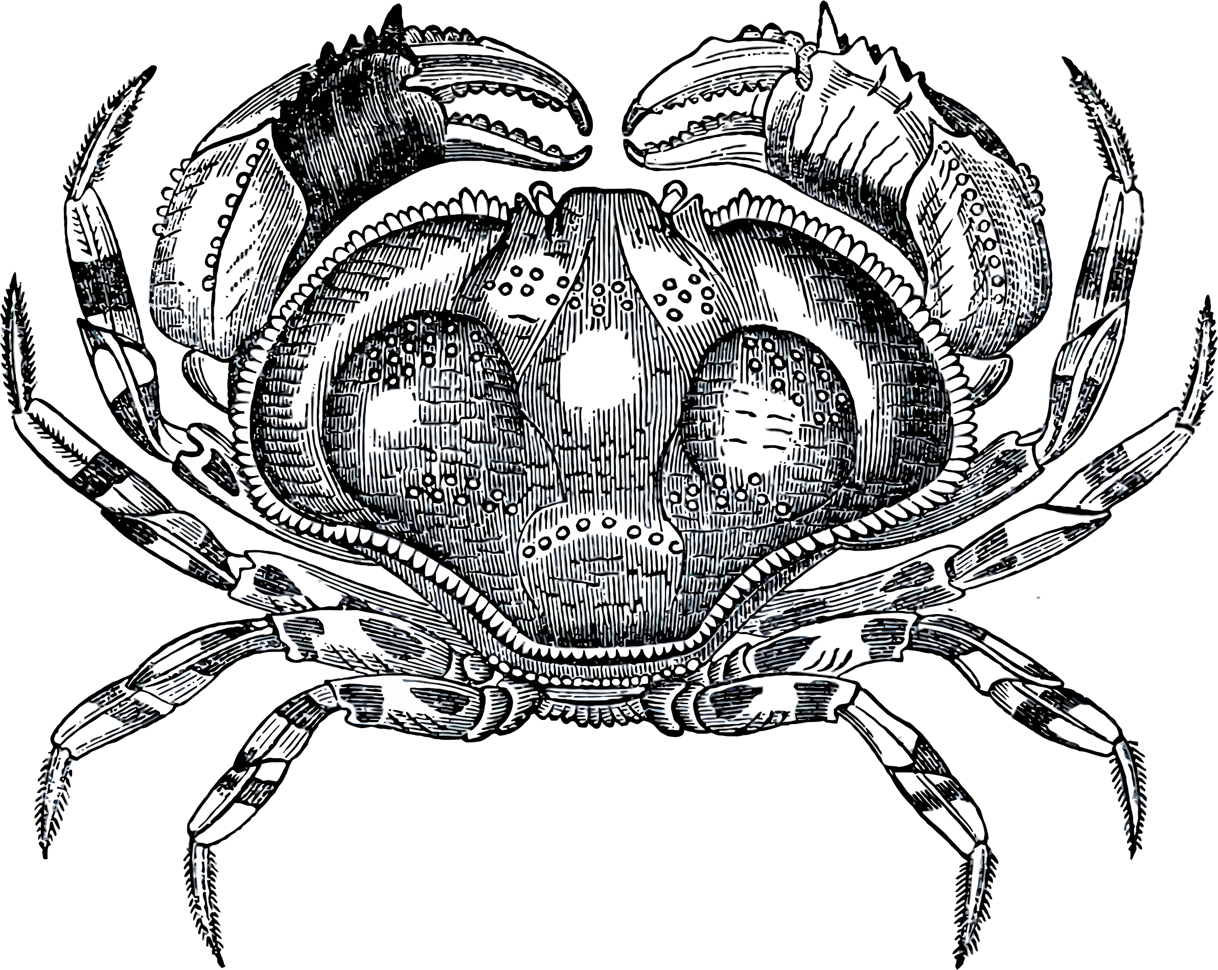Grayscale Crab by GDJ