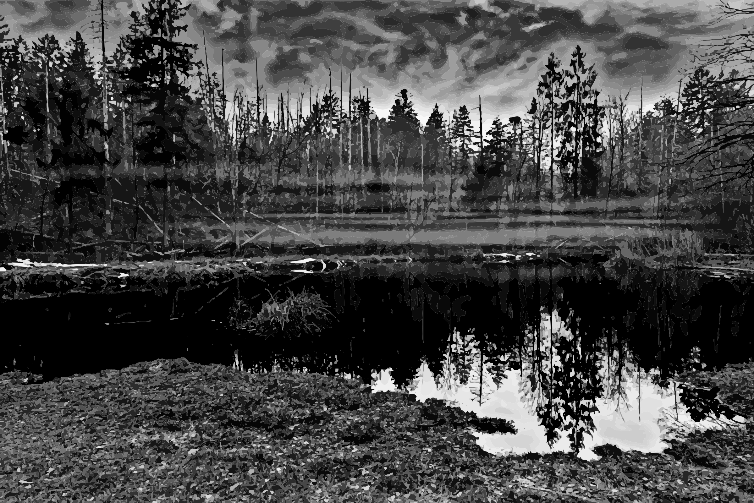 Swamp 3 Grayscale  by GDJ