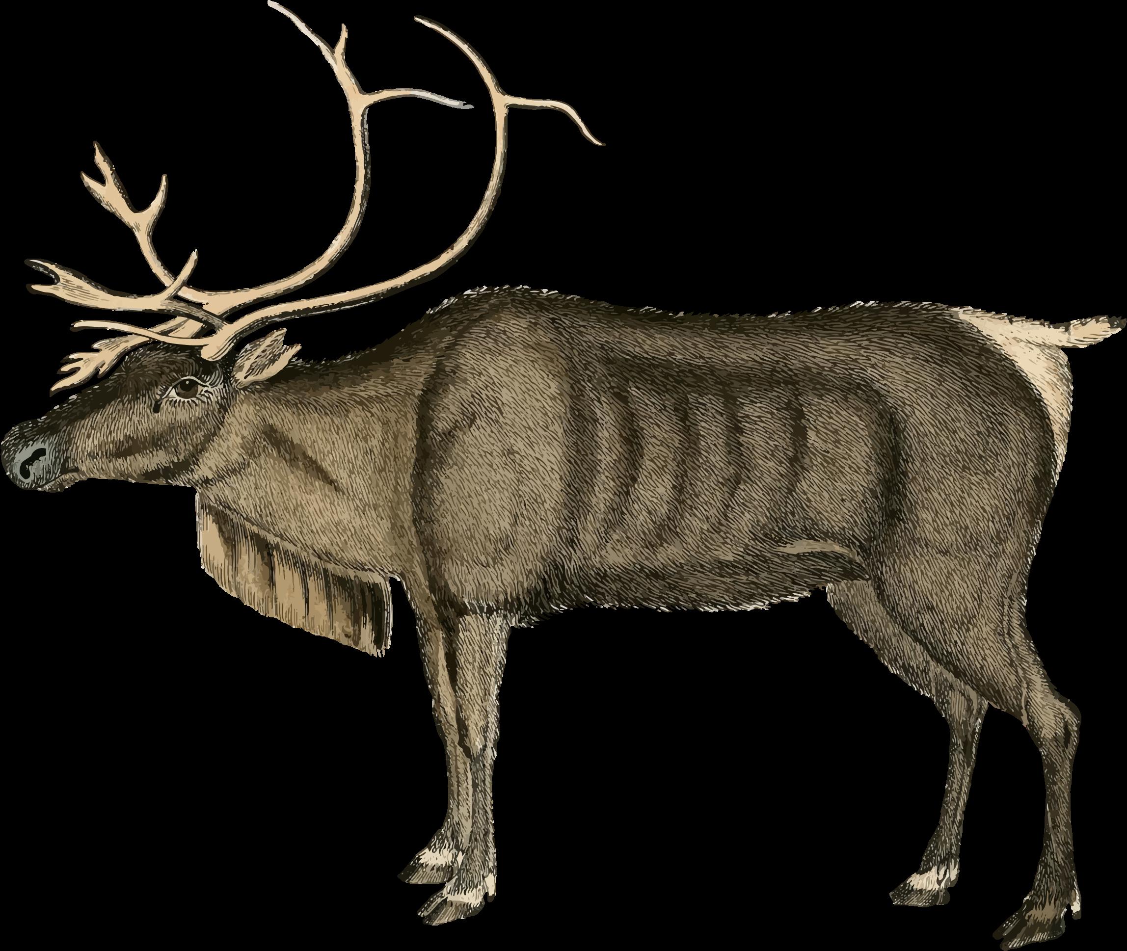 Clipart - Vintage Reindeer
