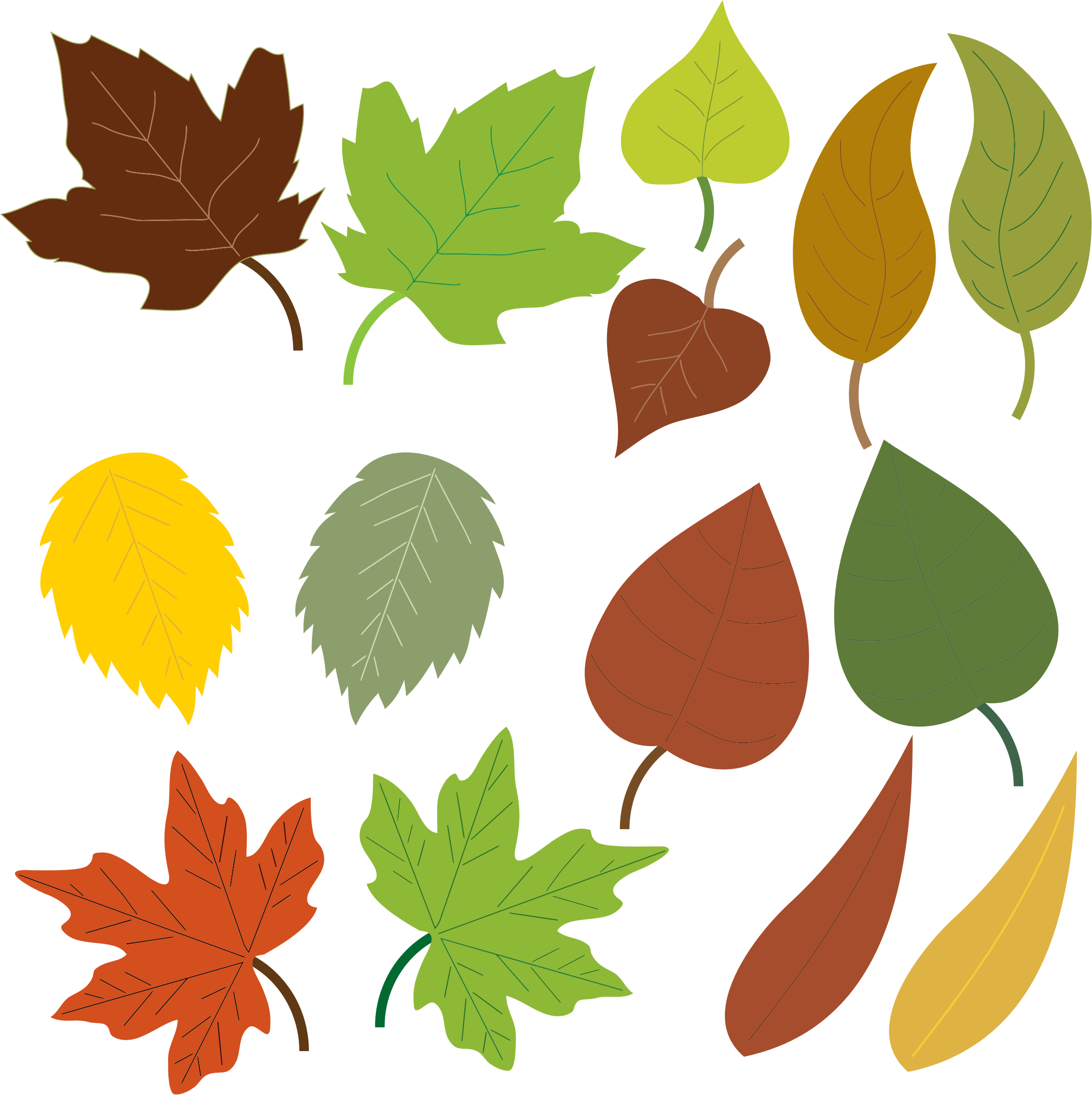 Variety Of Leaves by GDJ