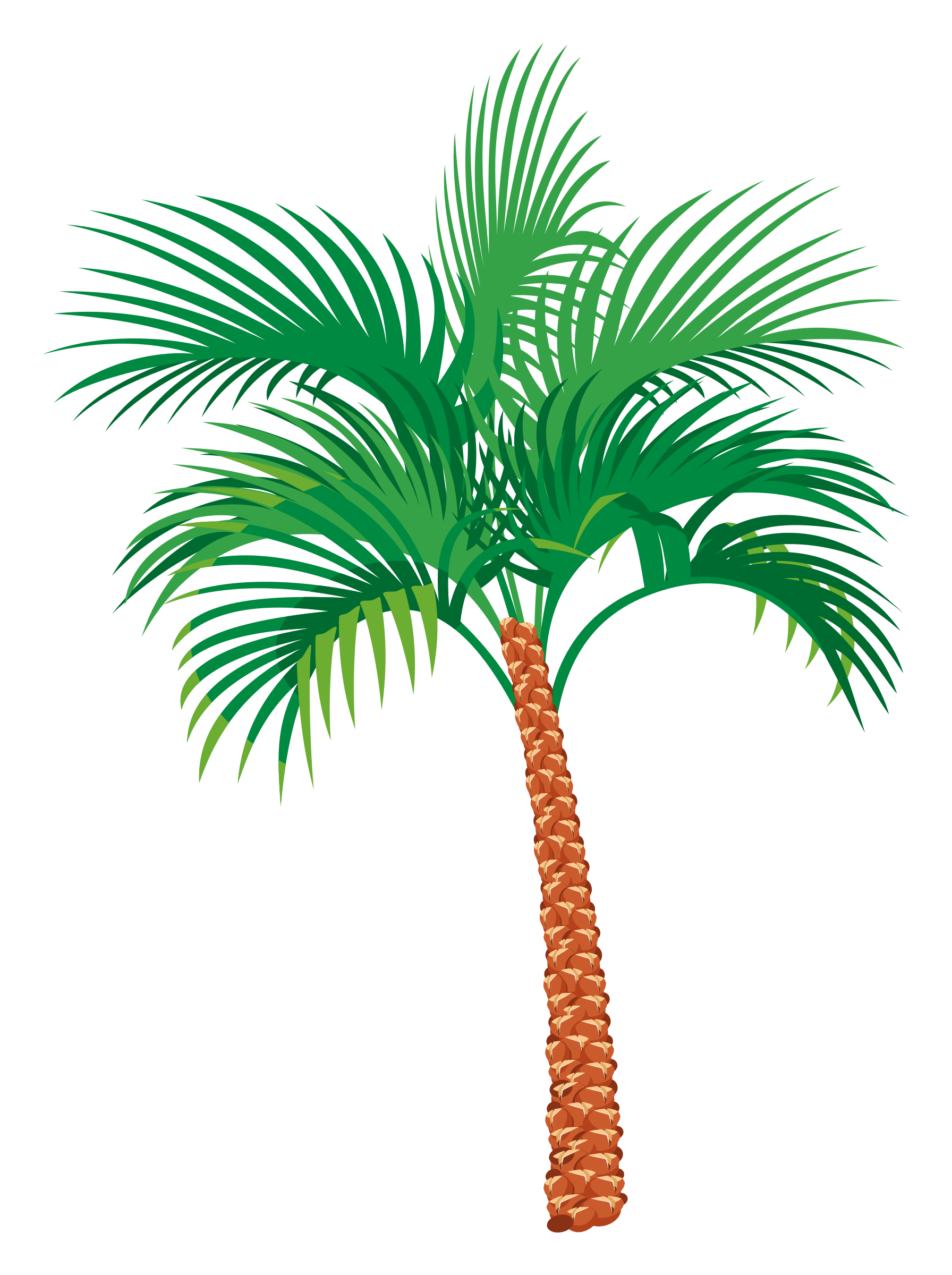 Palm tree by floEdelmann