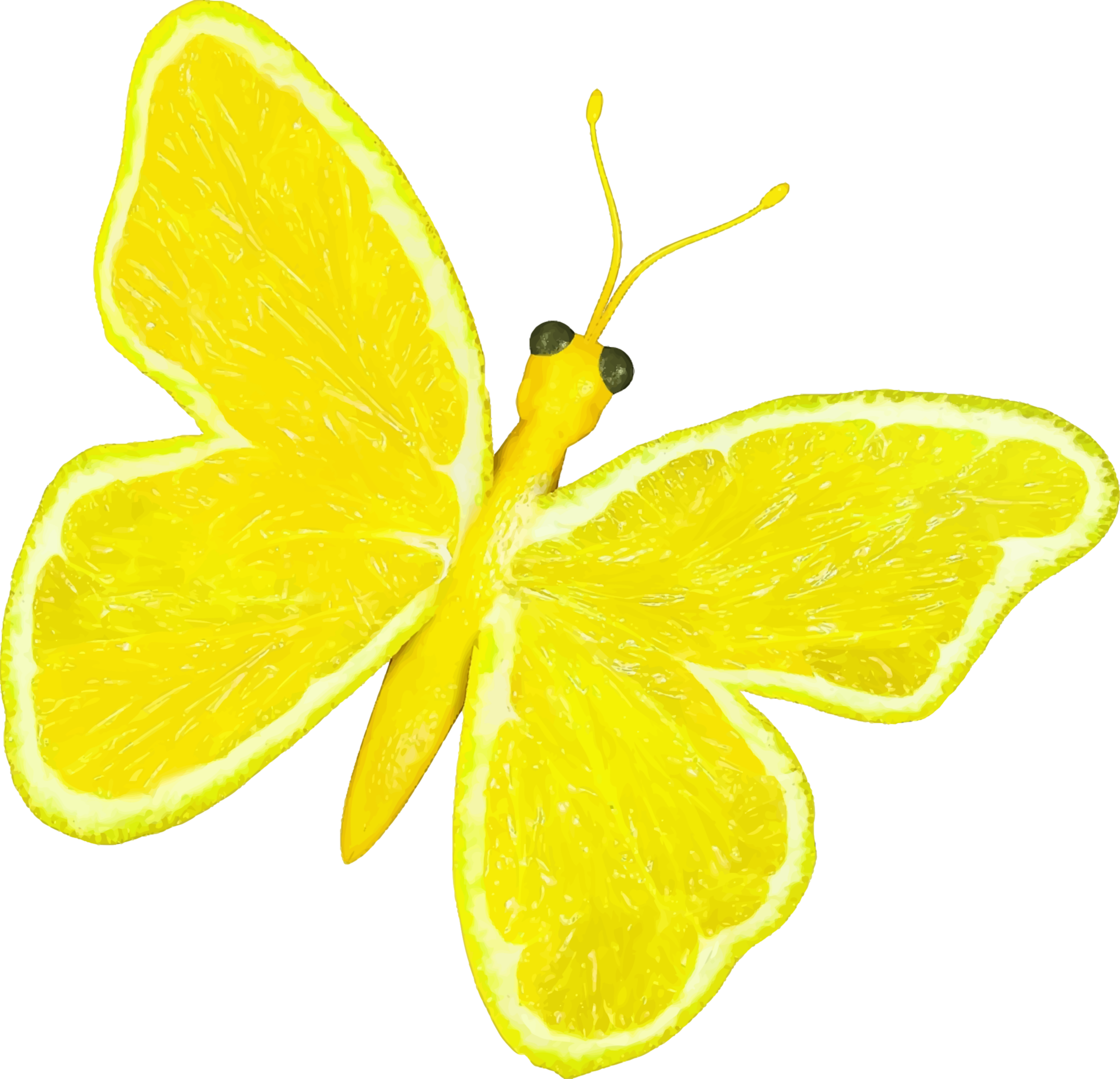 Citrus fruit butterfly (lemon) by Firkin
