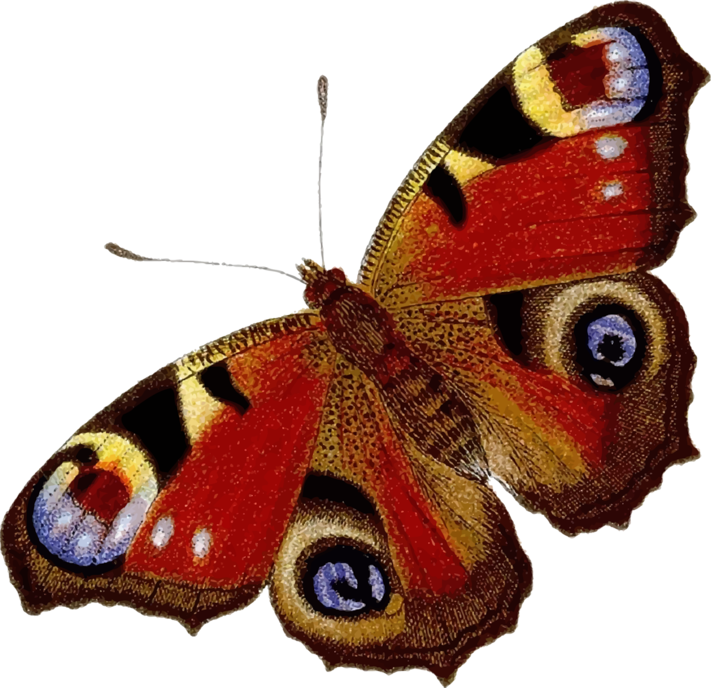 Peacock butterfly (colour) by Firkin