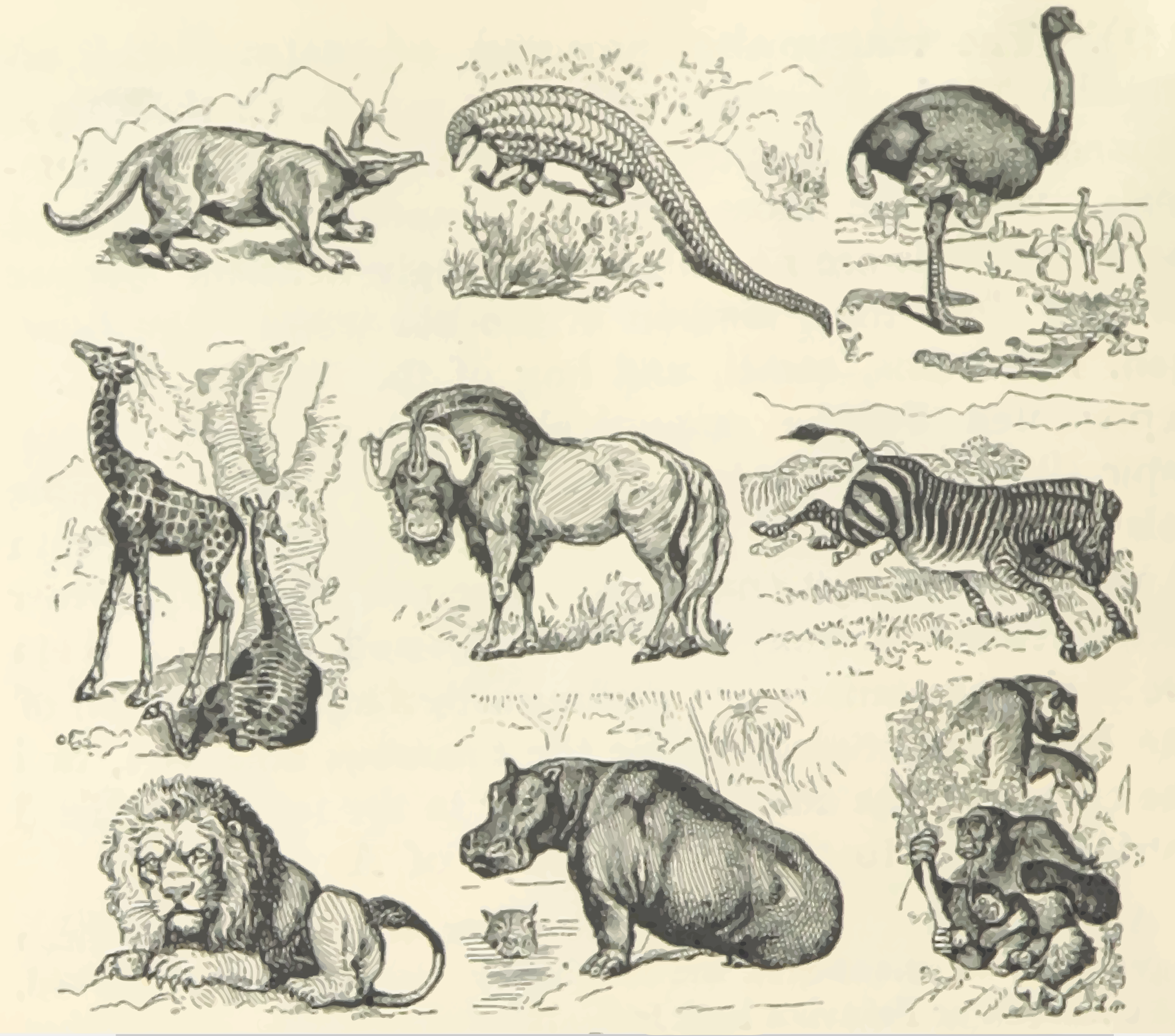 African animals by Firkin