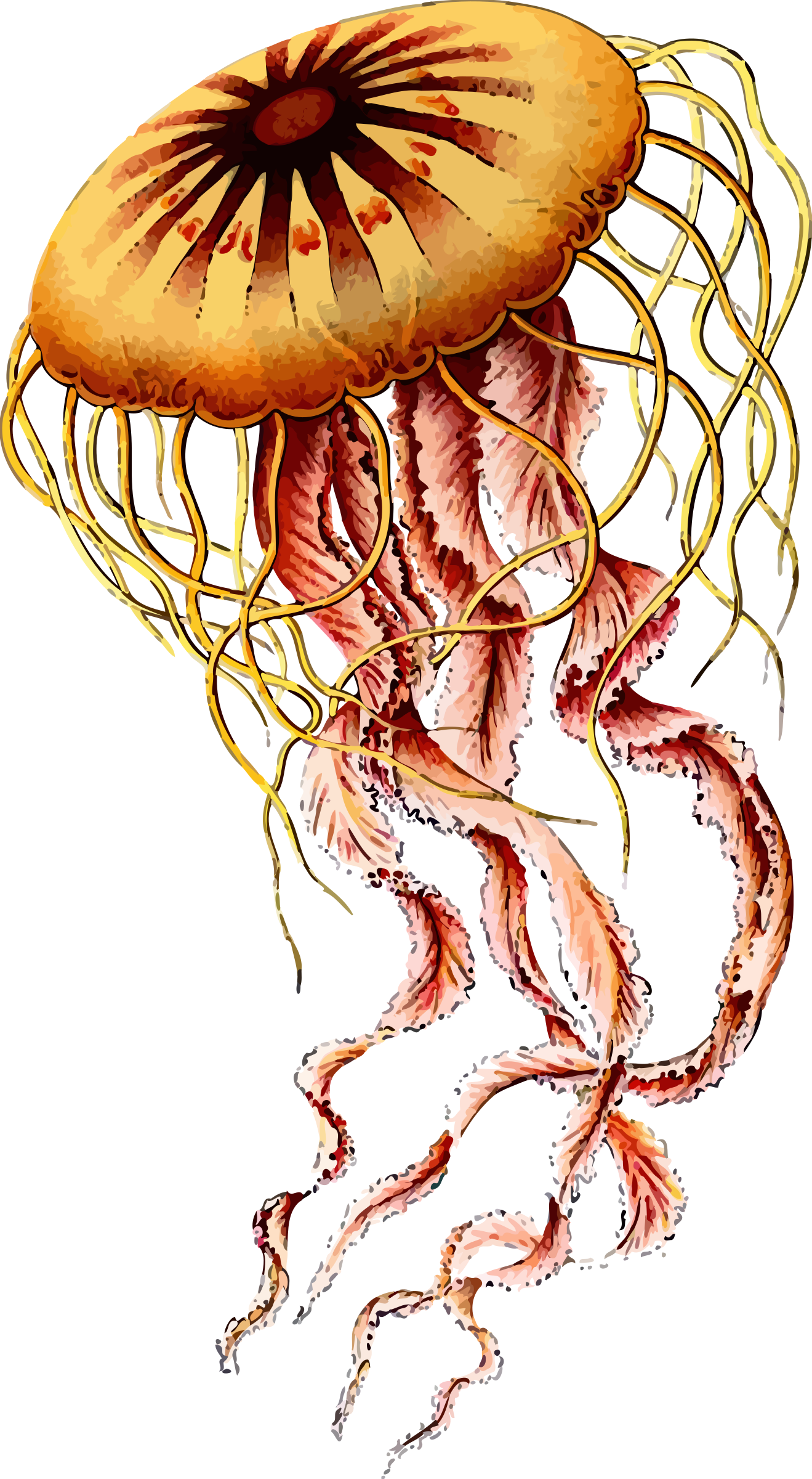 Jellyfish by Firkin