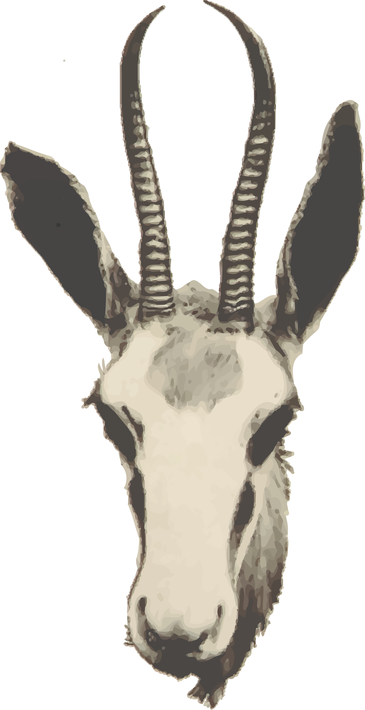 clipart springbok - photo #42