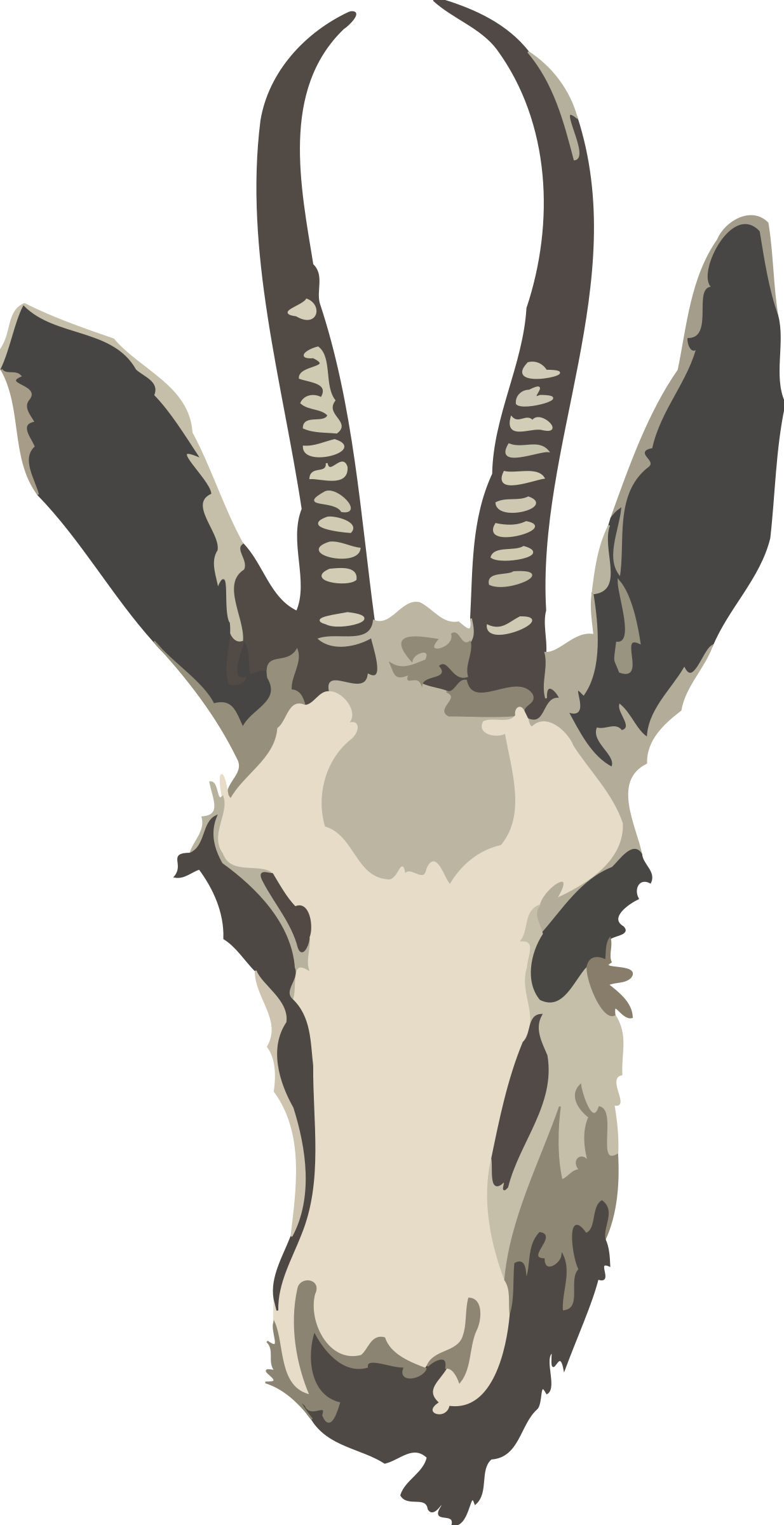 Springbok ewe's head (simplified) by Firkin