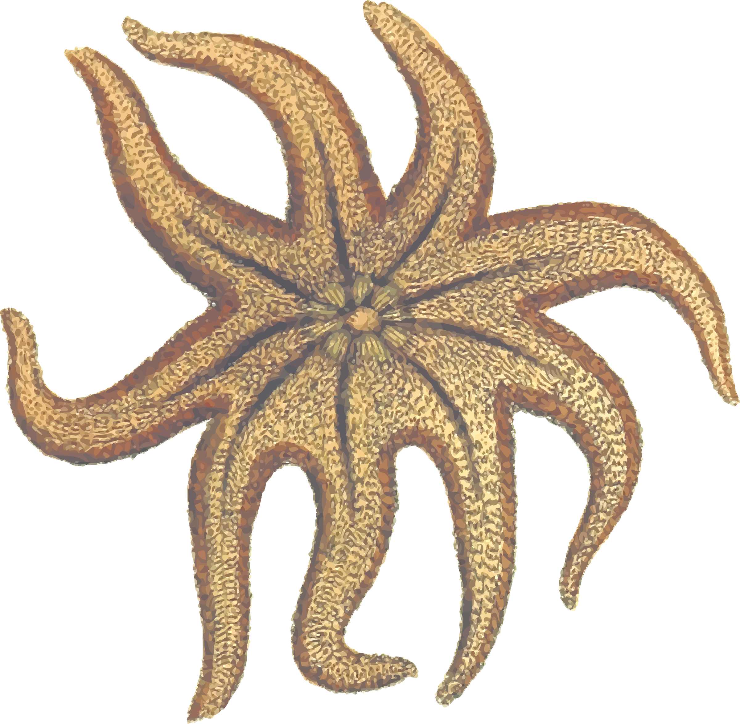 Seastar (colour) by Firkin