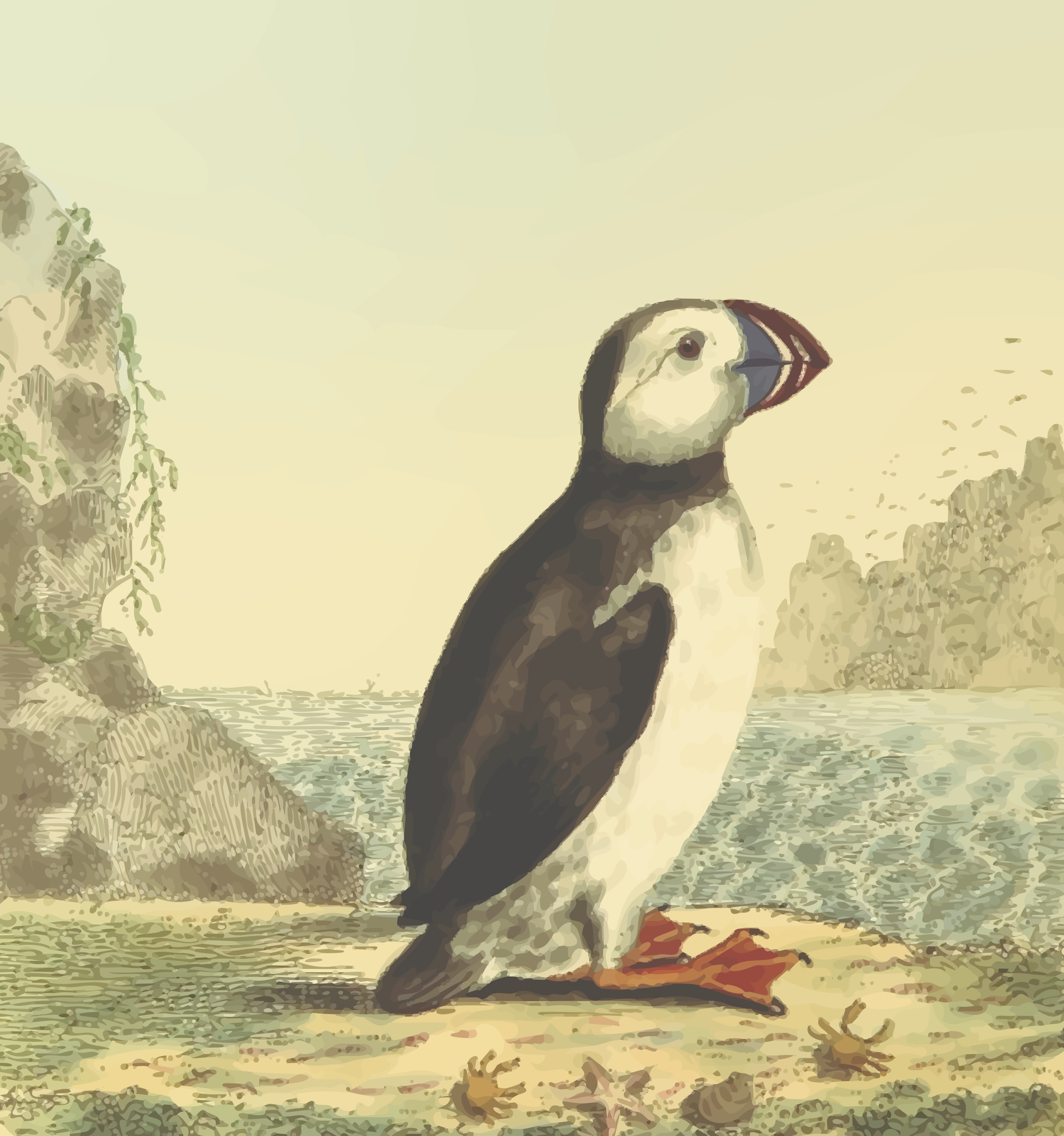 Puffin (with background) by Firkin