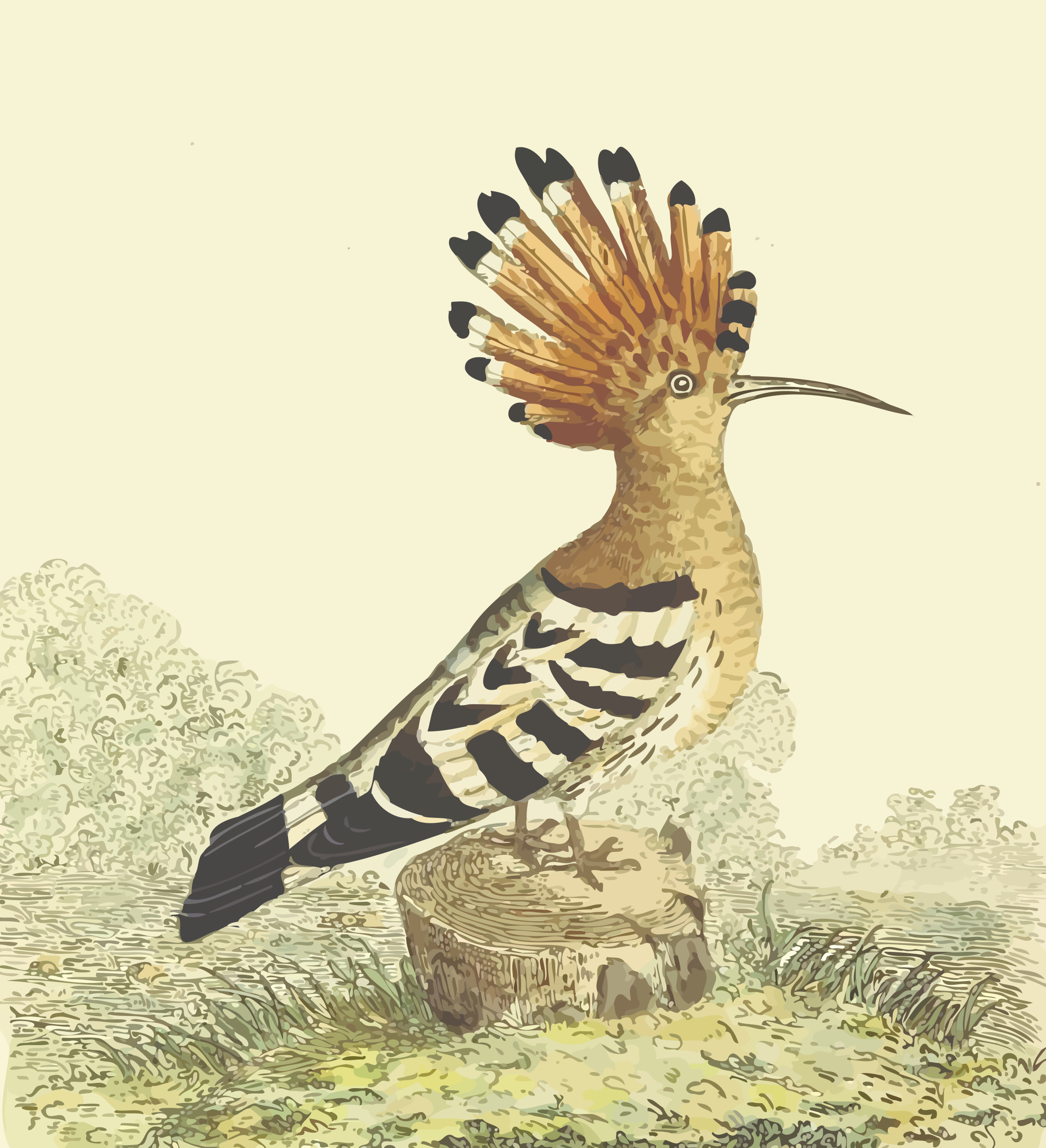 Hoopoe (with background) by Firkin