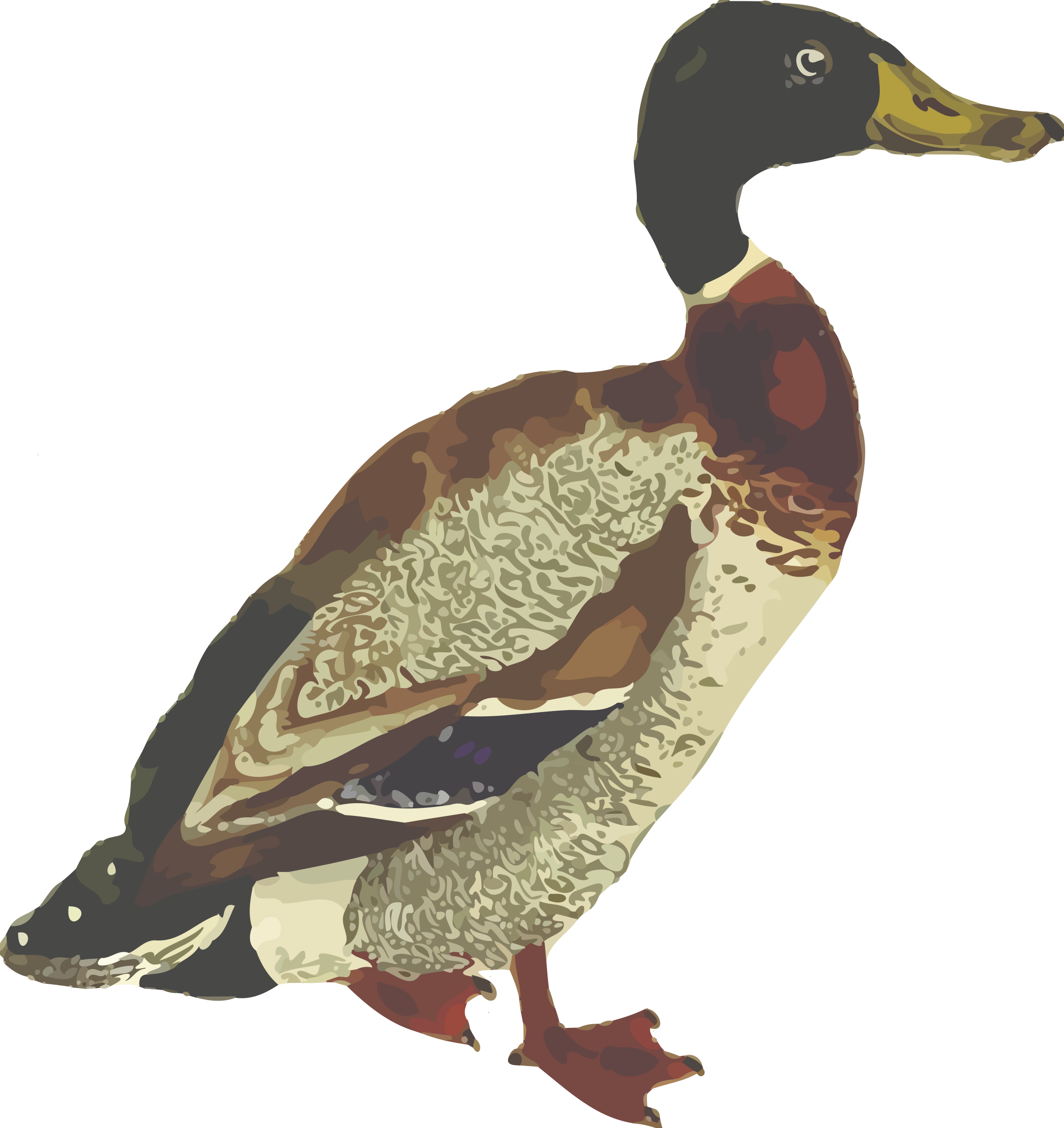 Mallard (isolated) by Firkin