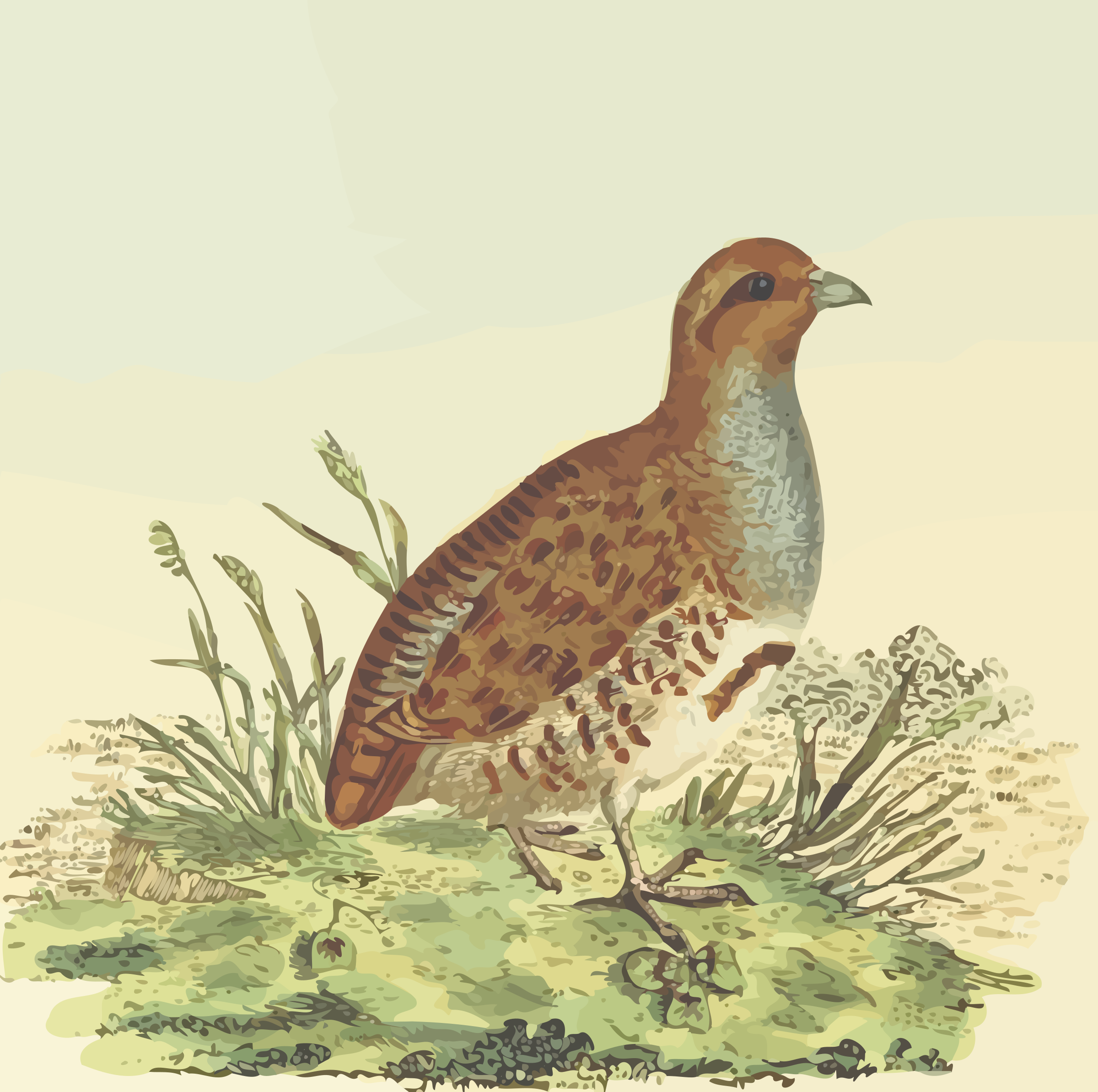 Peacock likewise Grey Partridge With Background additionally Doubleheaded Eagle as well Basquiat Cartes Postales Pf together with 509540145321911236. on big bird drawing