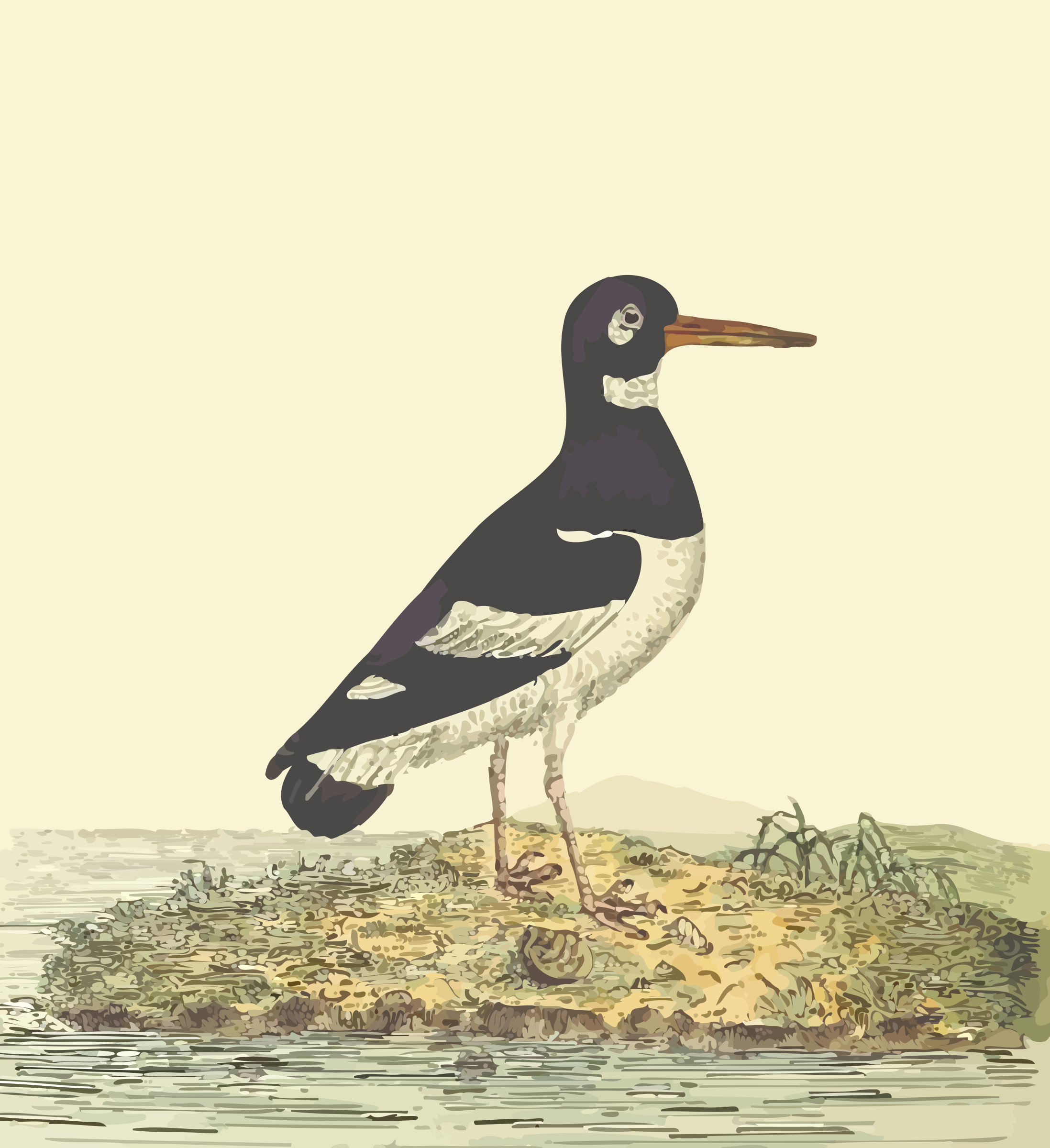Eurasian oystercatcher (with background) by Firkin