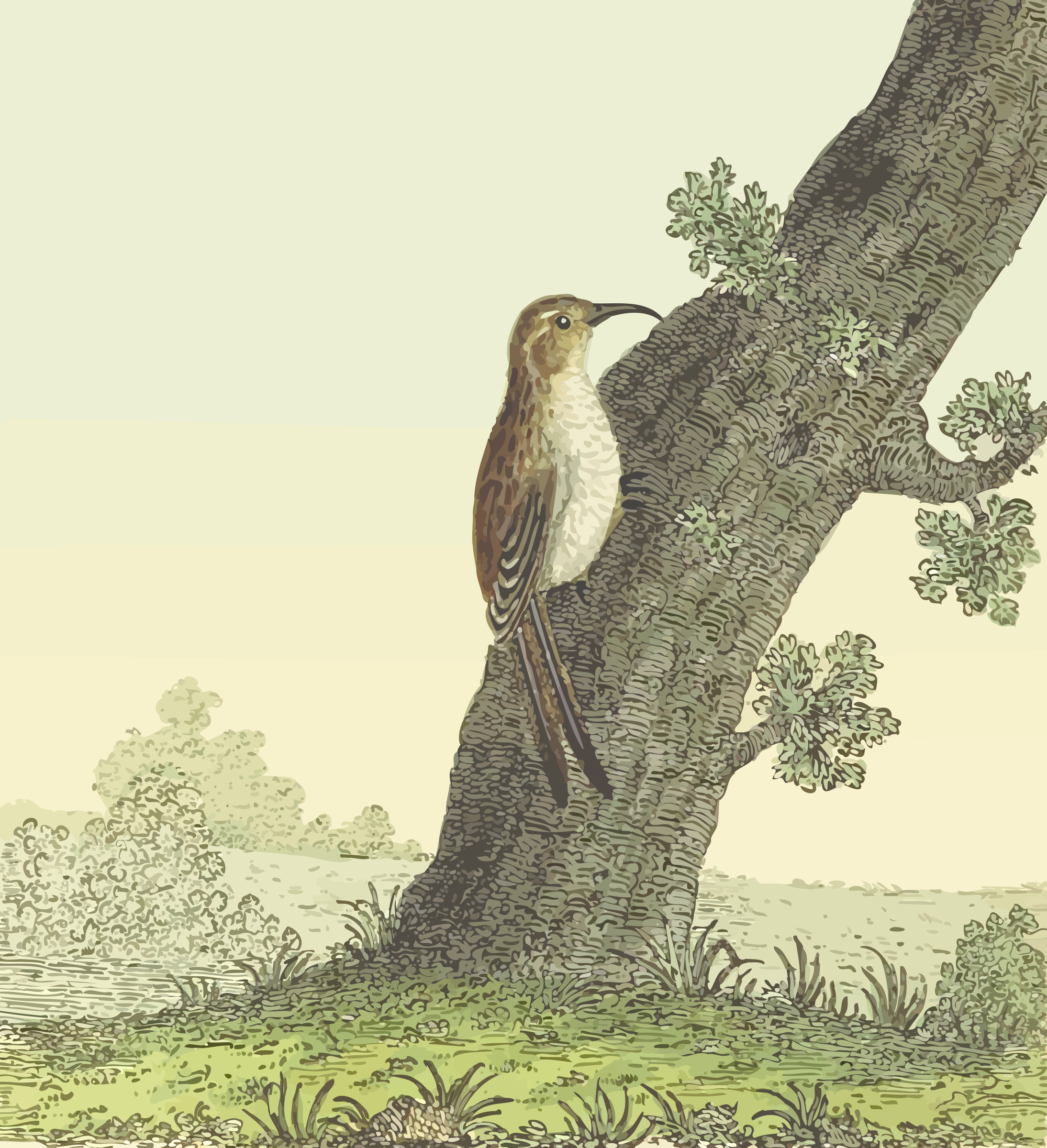 Common treecreeper (with background) by Firkin