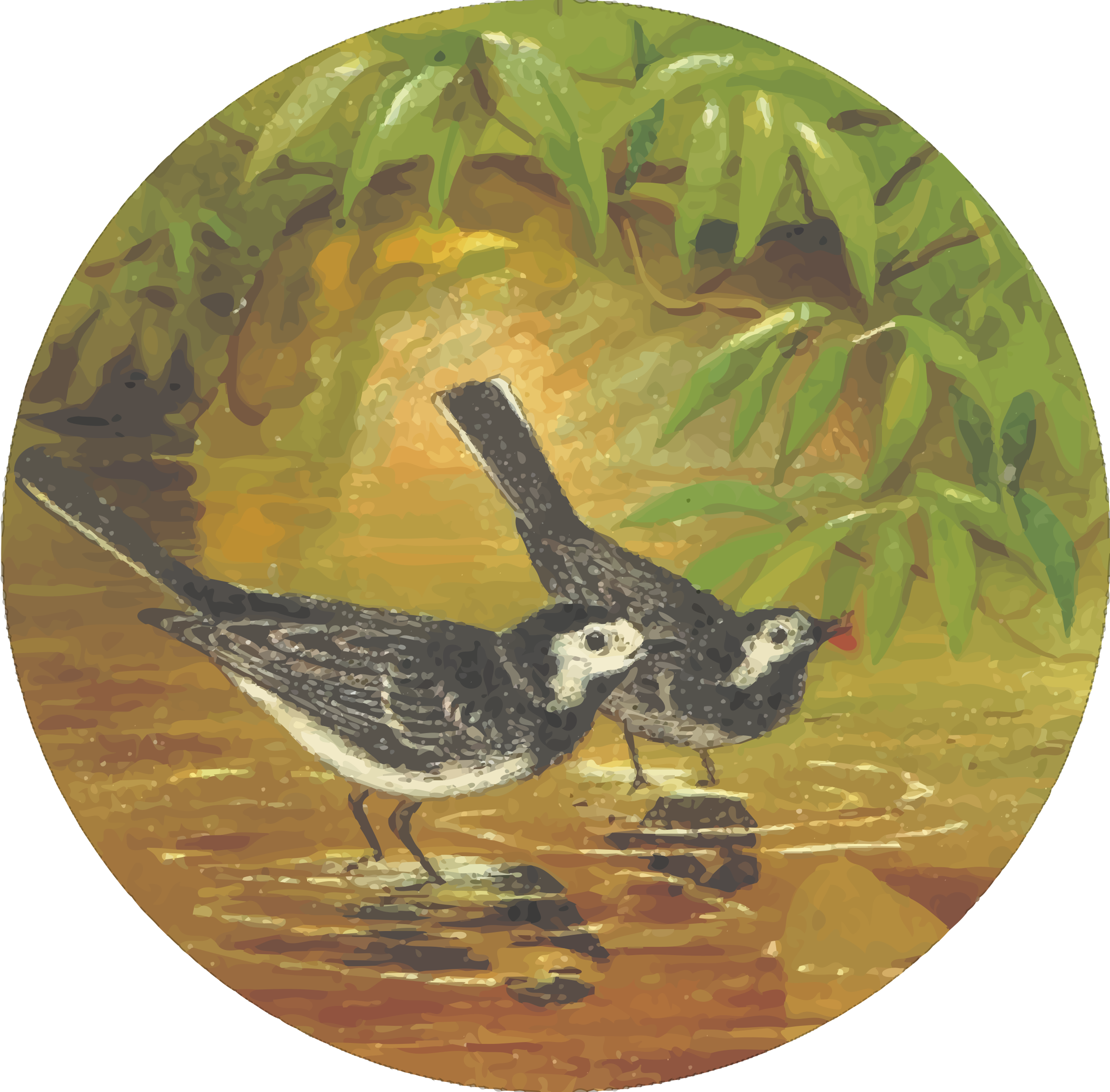 Circular water wagtail drawing by Firkin