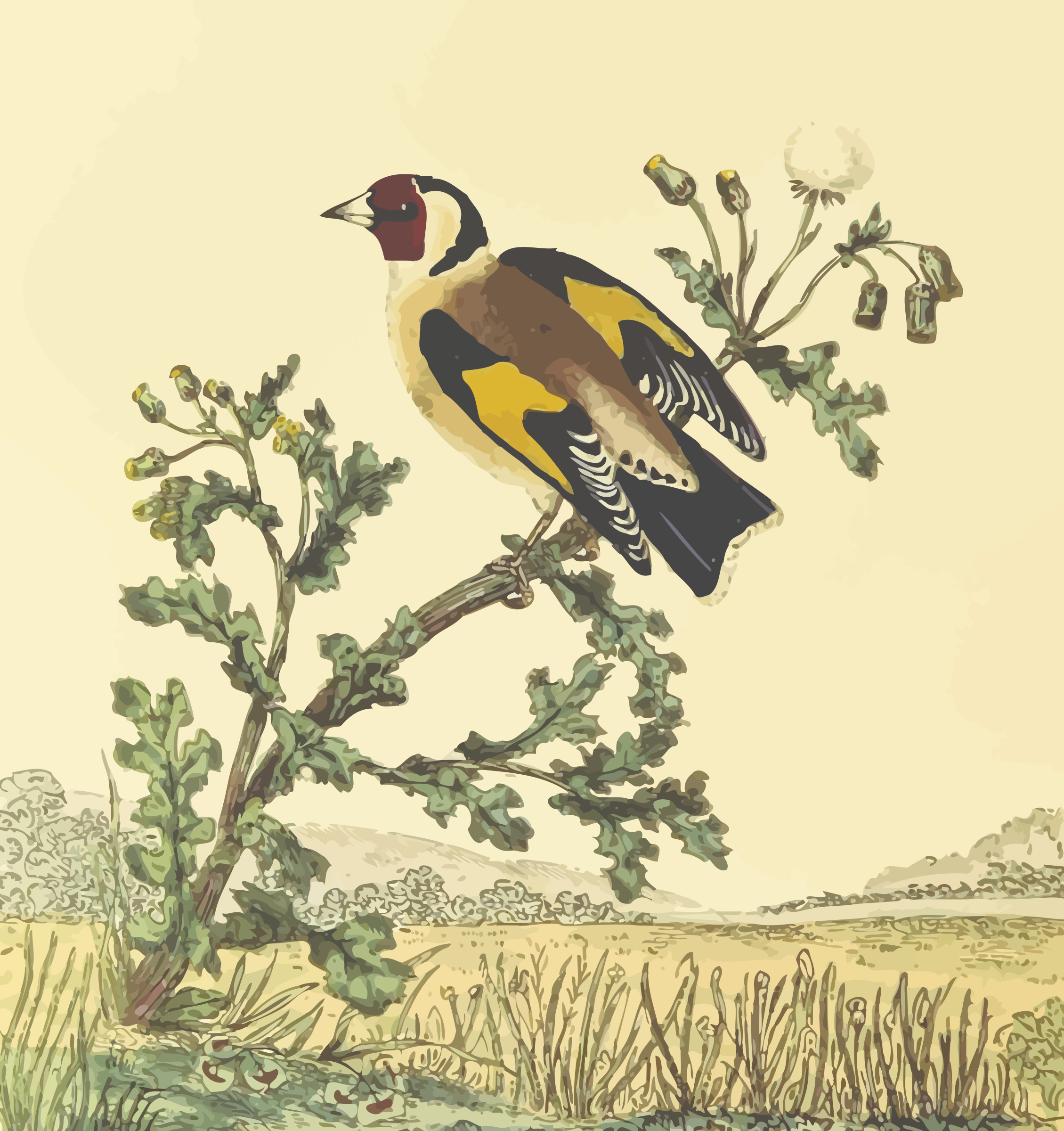 Goldfinch (with background) by Firkin