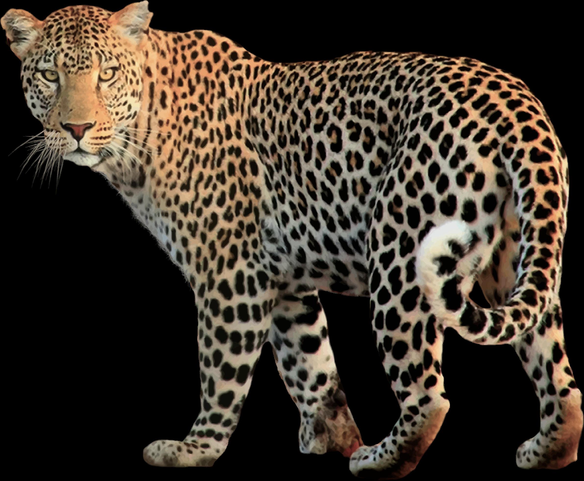 jaguar animal clipart - photo #42