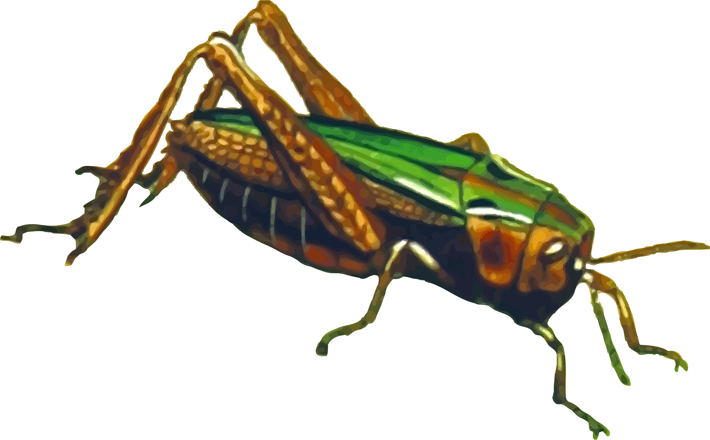 Common green grasshopper (isolated) by Firkin