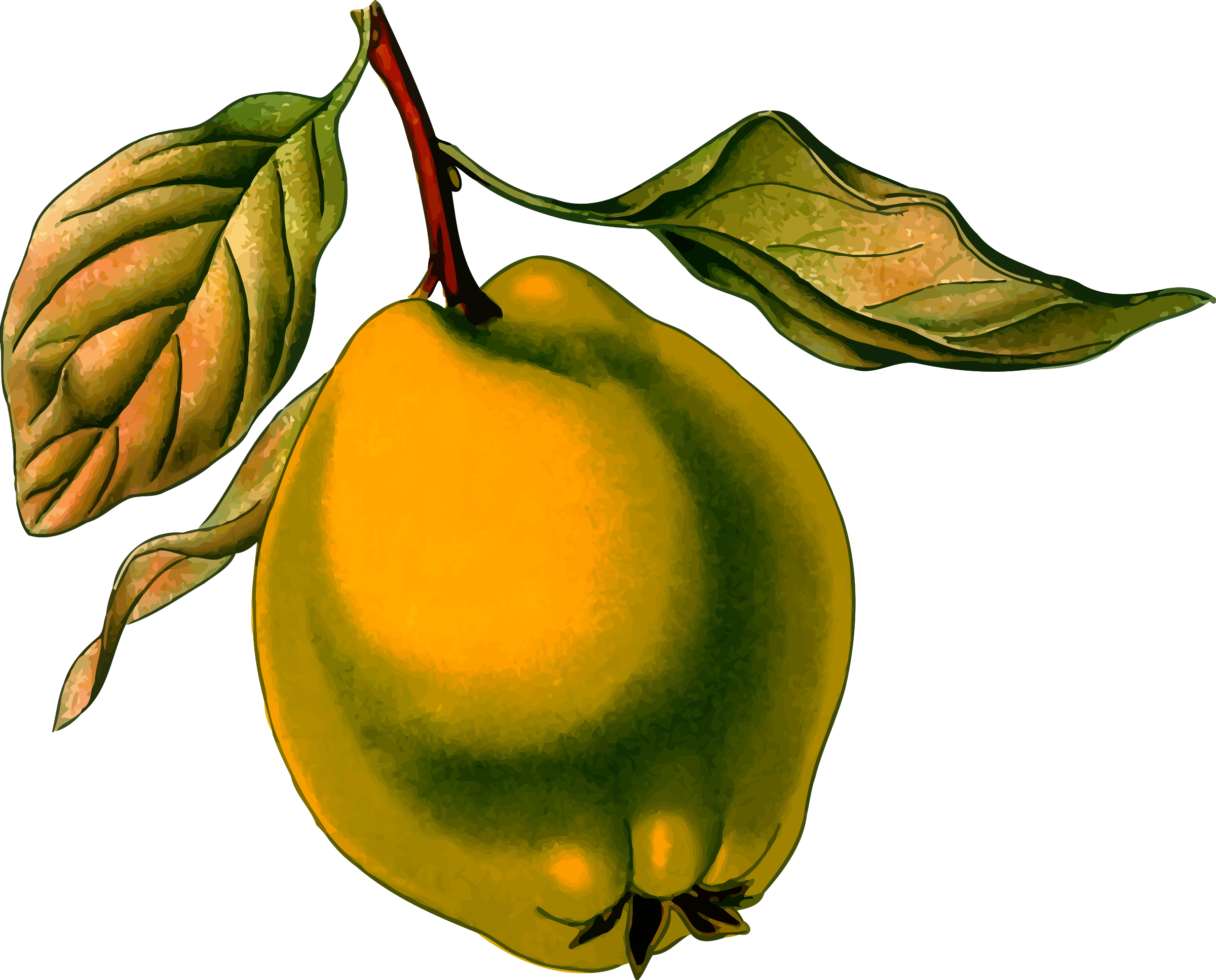 Quince 3 (detailed) by Firkin