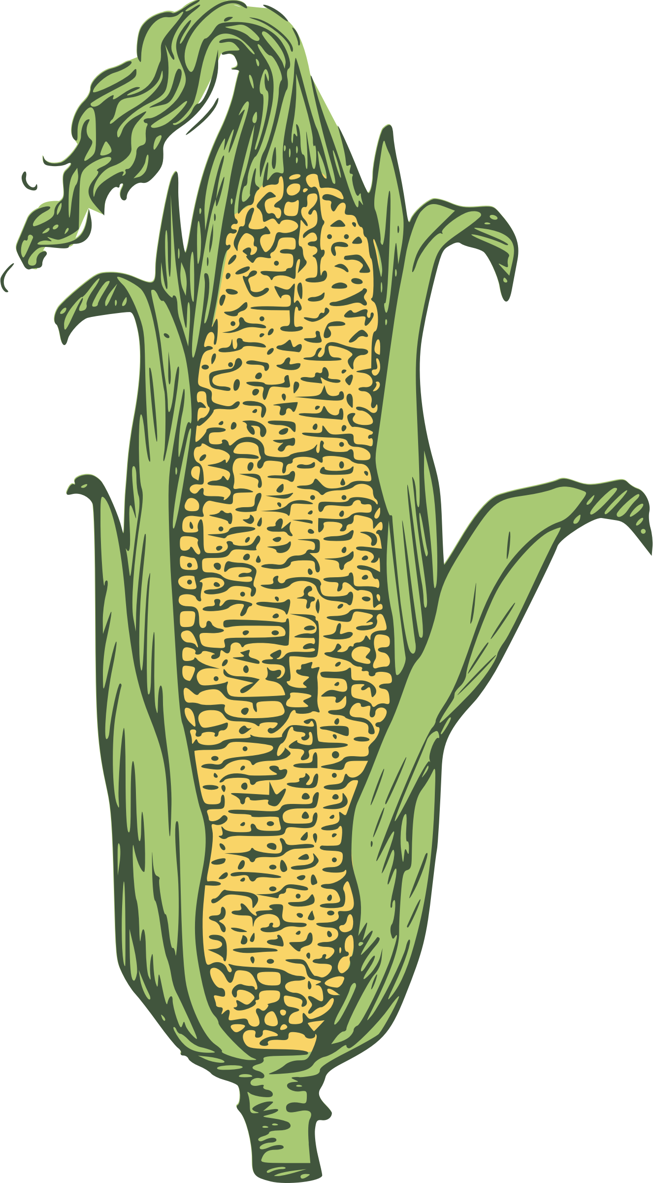 ear of corn - colored by Anonymous