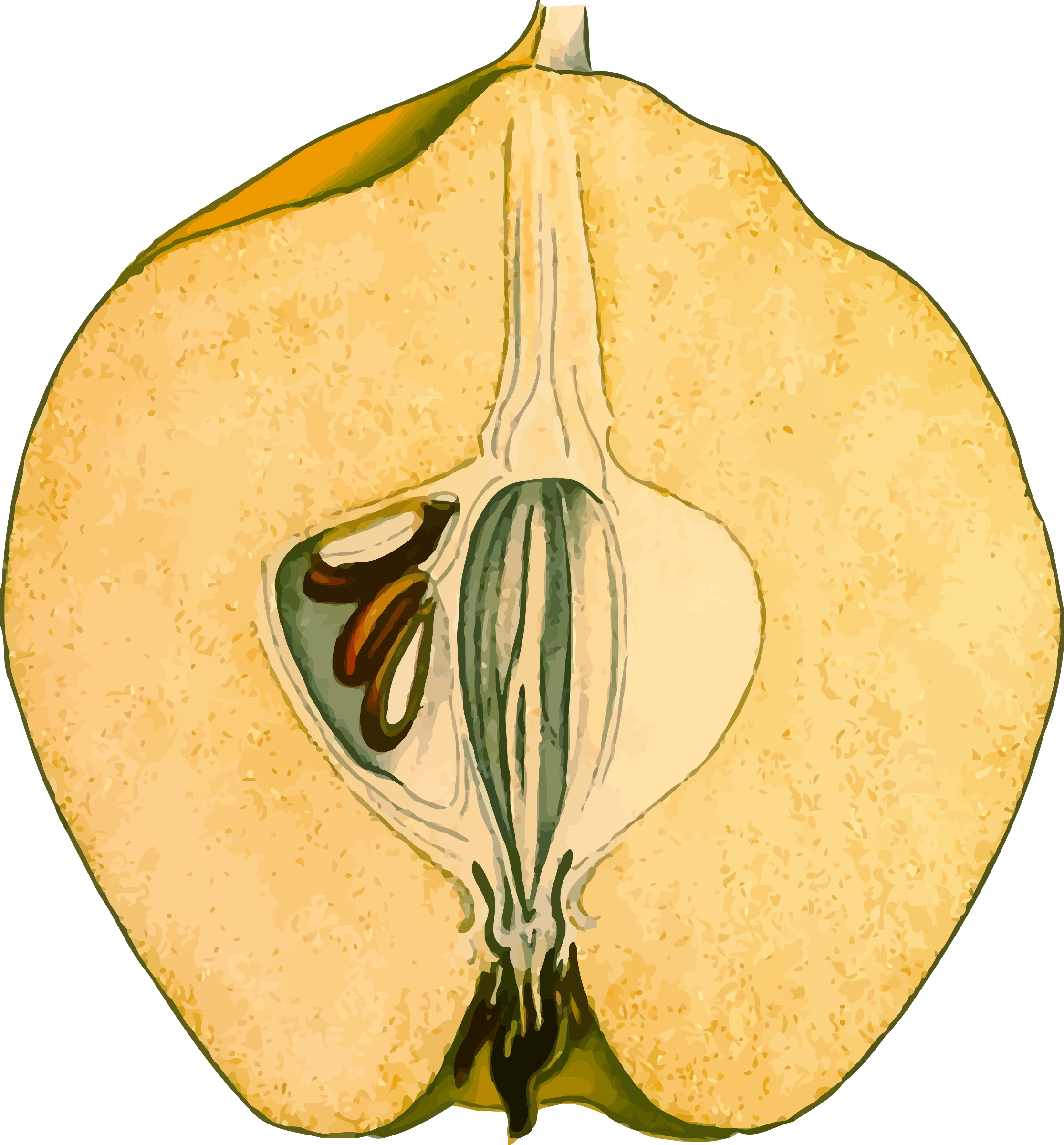 Half-quince (detailed) by Firkin