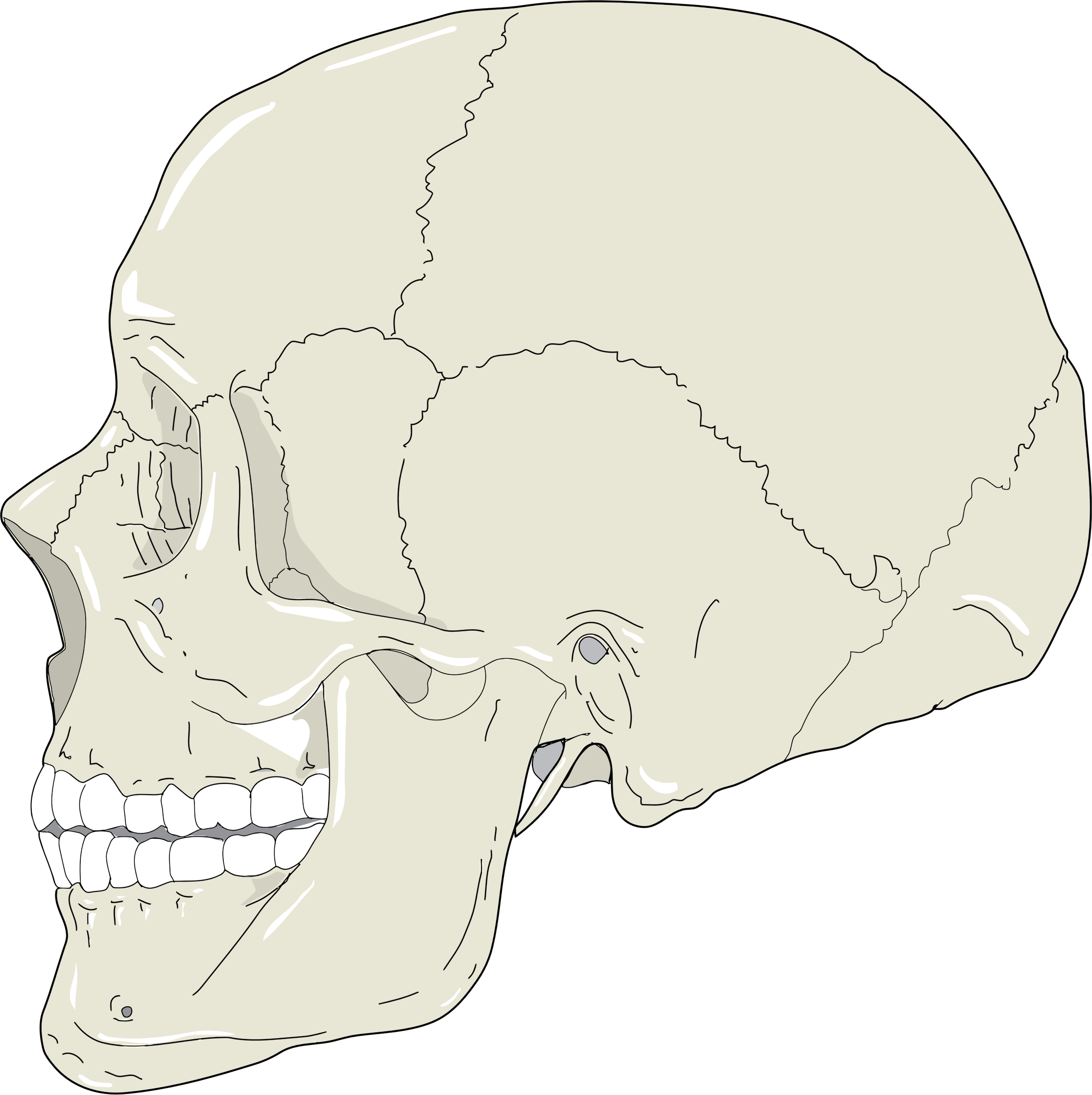 Realistic Human Skull Profile View by GDJ
