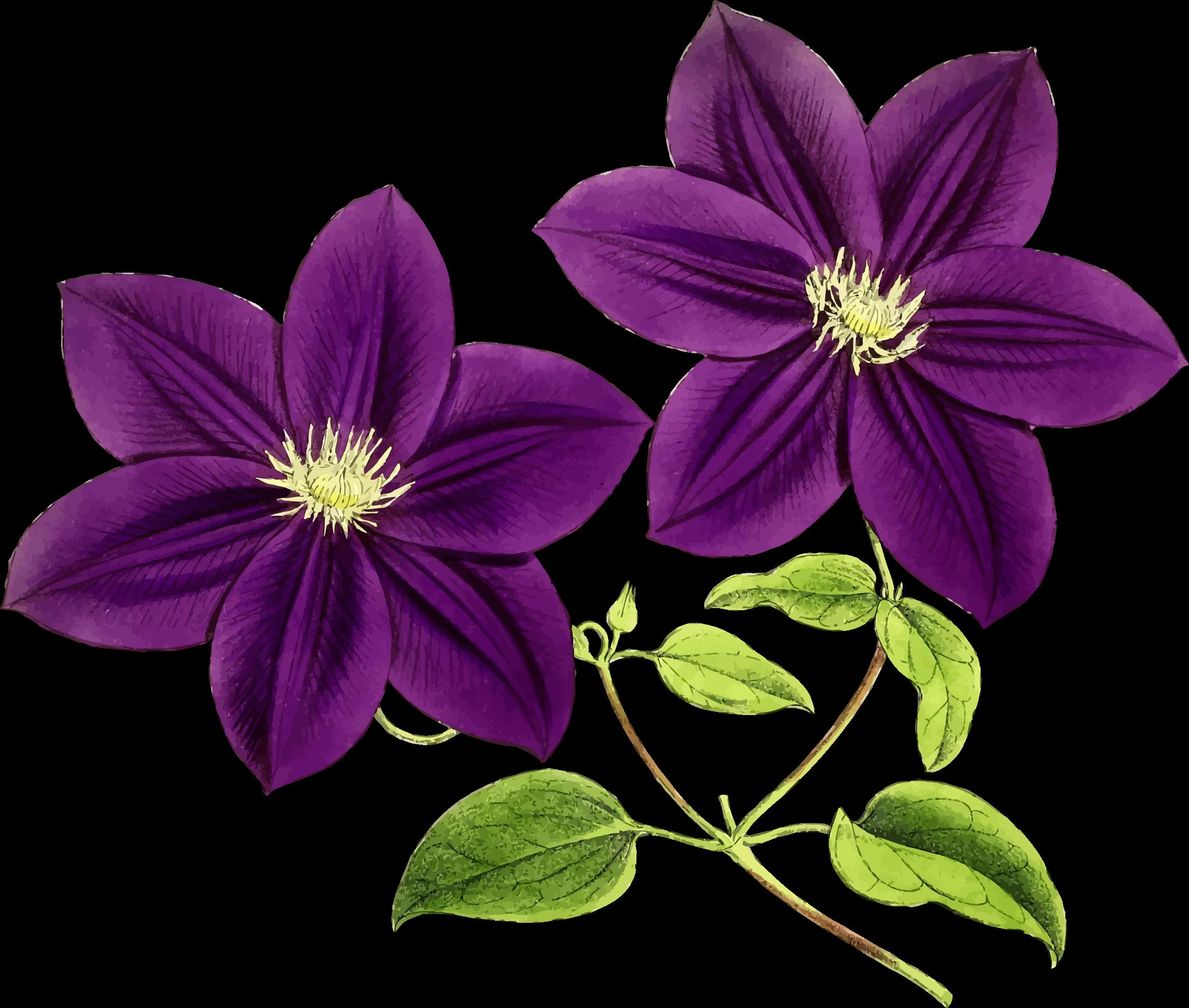 Clipart Purple Flowers Pozickyprovidentfo Gallery