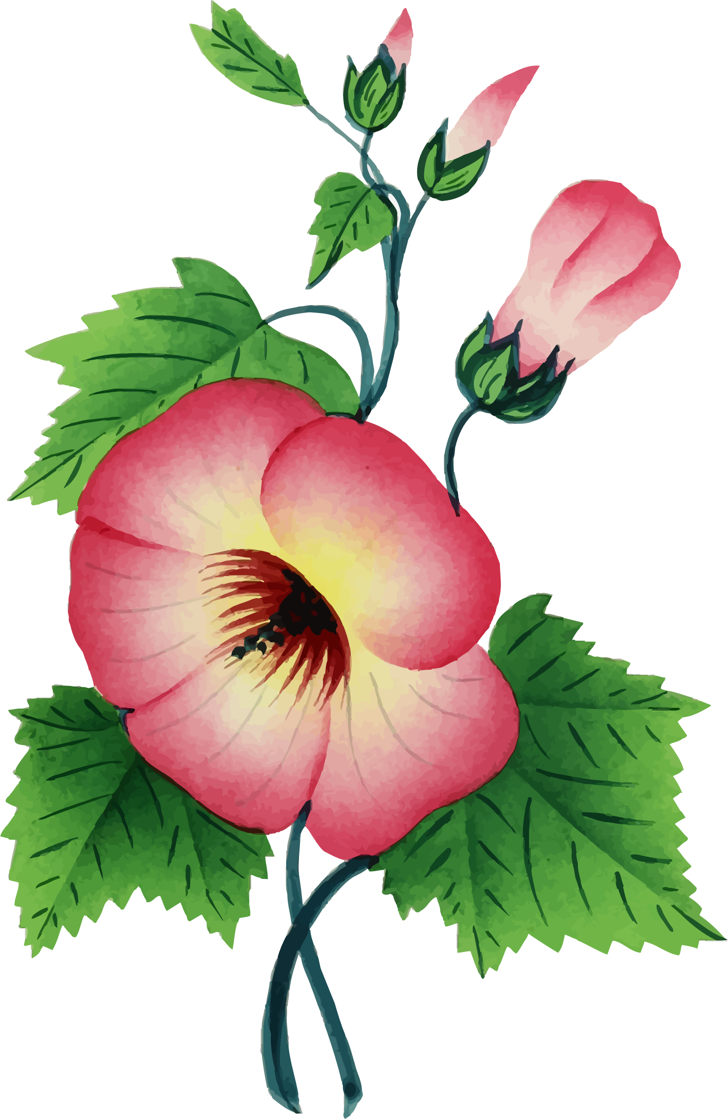 Flower Illustration 3 by GDJ
