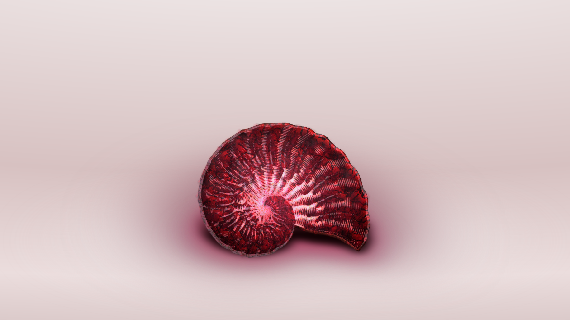 arrows ammonite 3 by Lazur URH