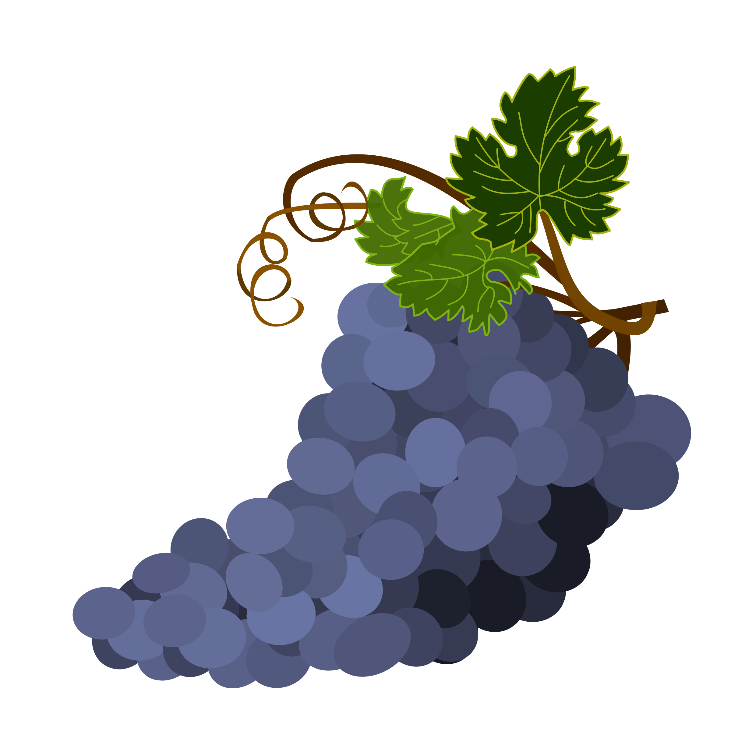 Purple Grapes by m.berkancetin