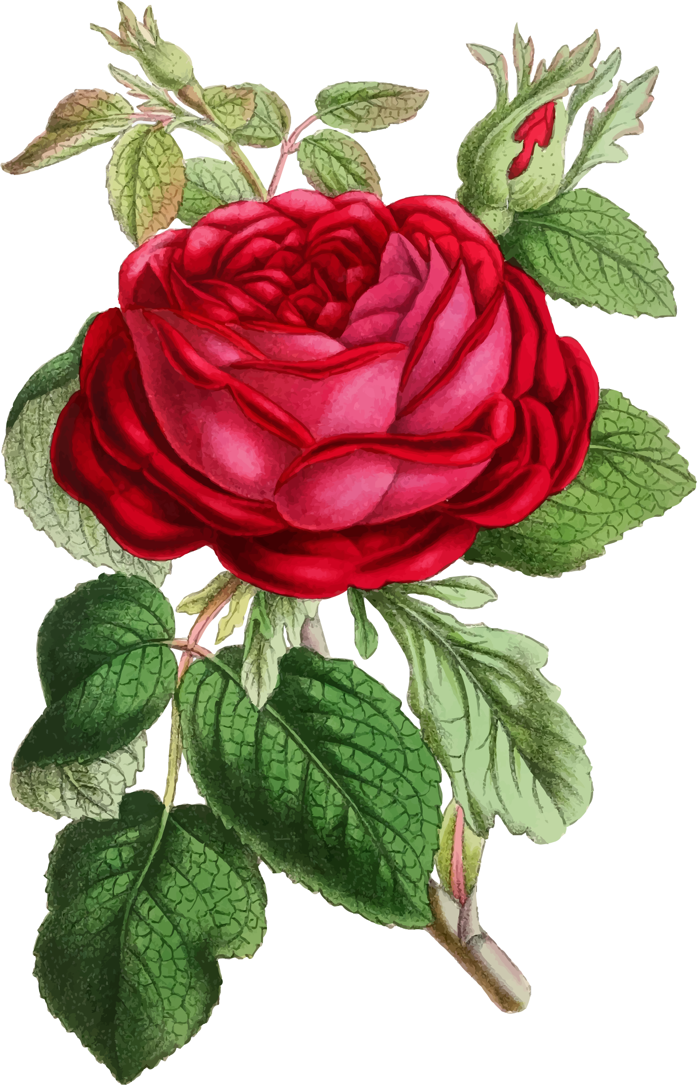 clipart vintage rose illustration red rose clip art borders edges printable red roses clipart borders
