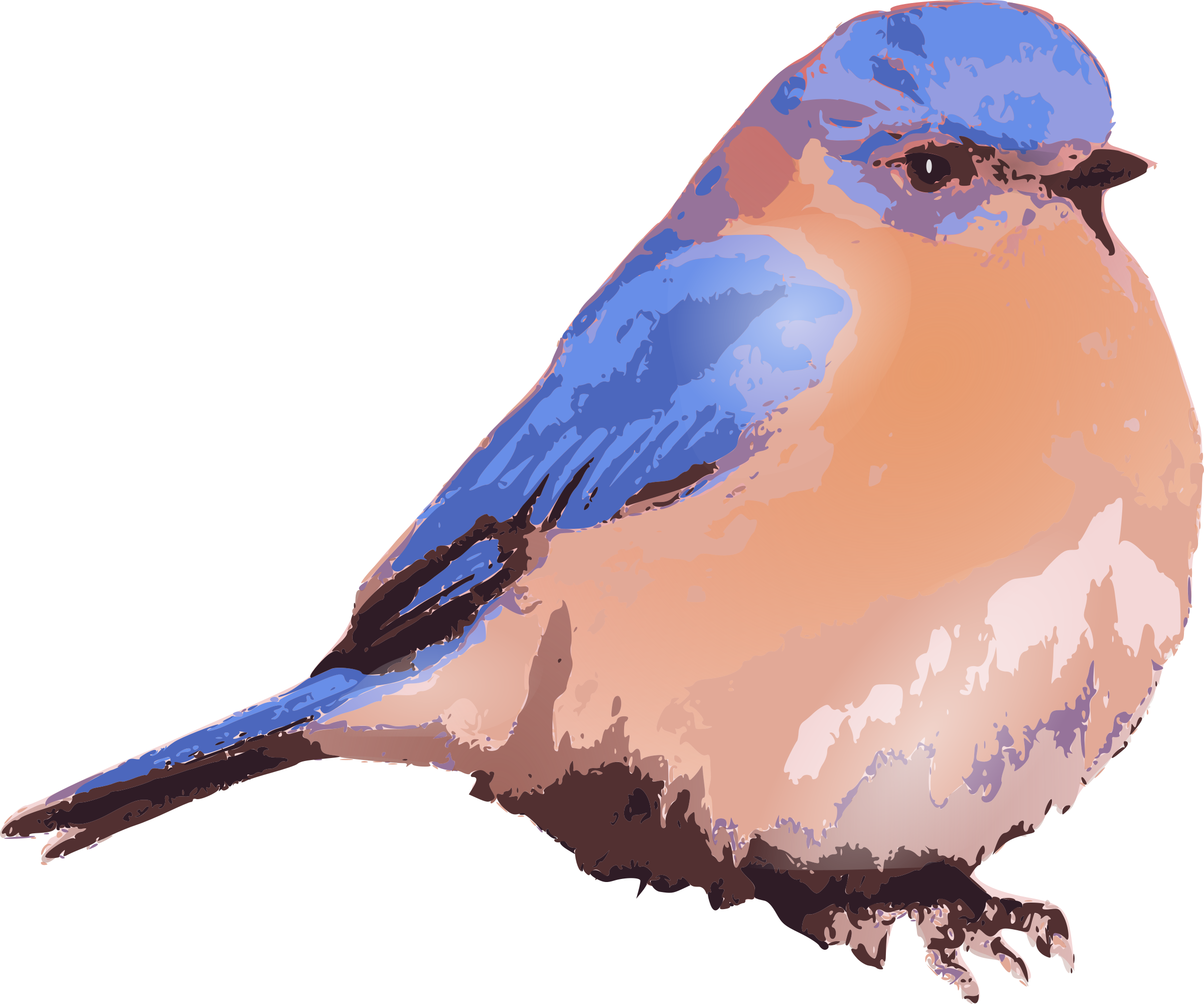 Eastern bluebird by amilo