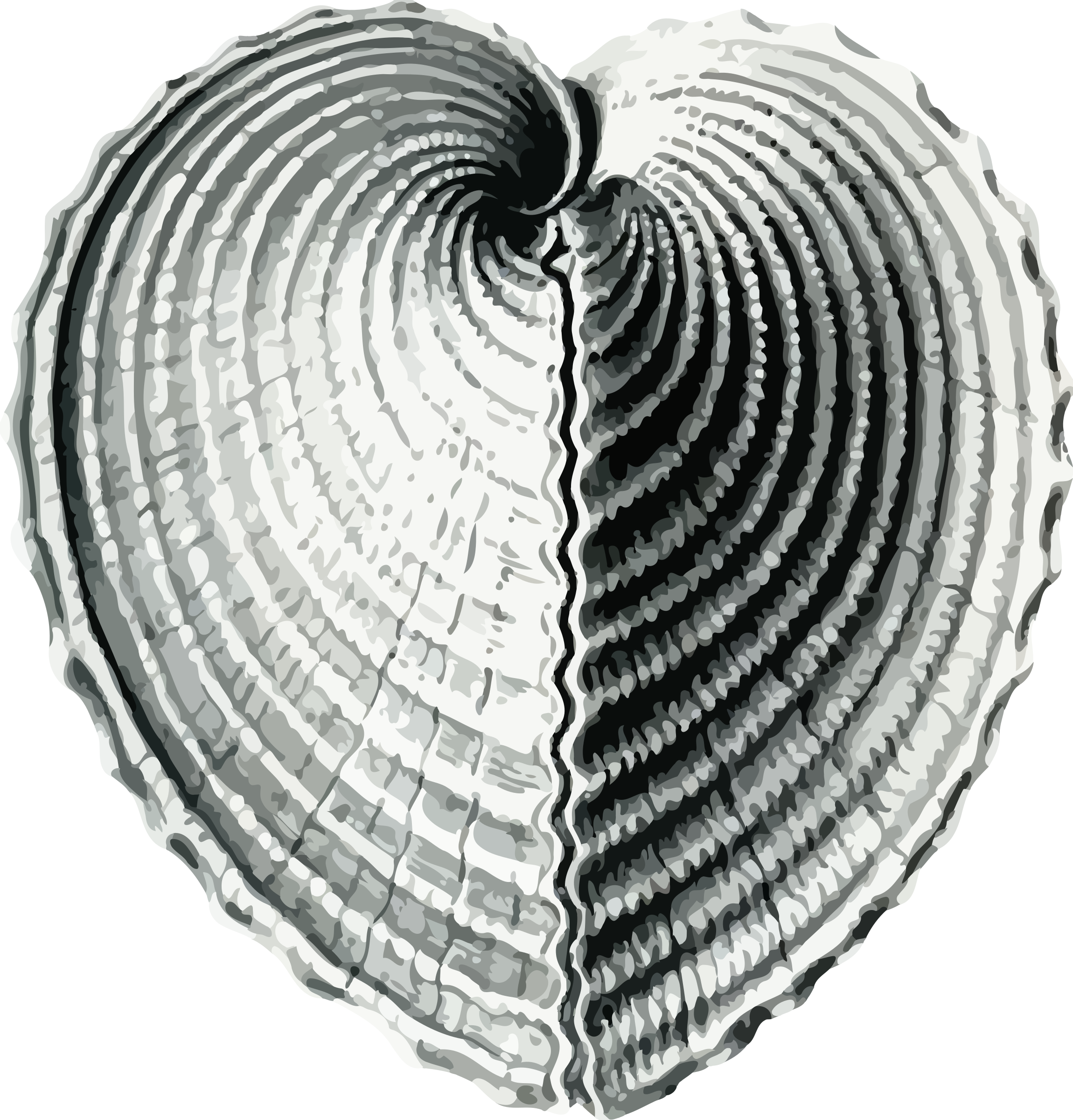 Bivalve 1 - heart cockle by Firkin