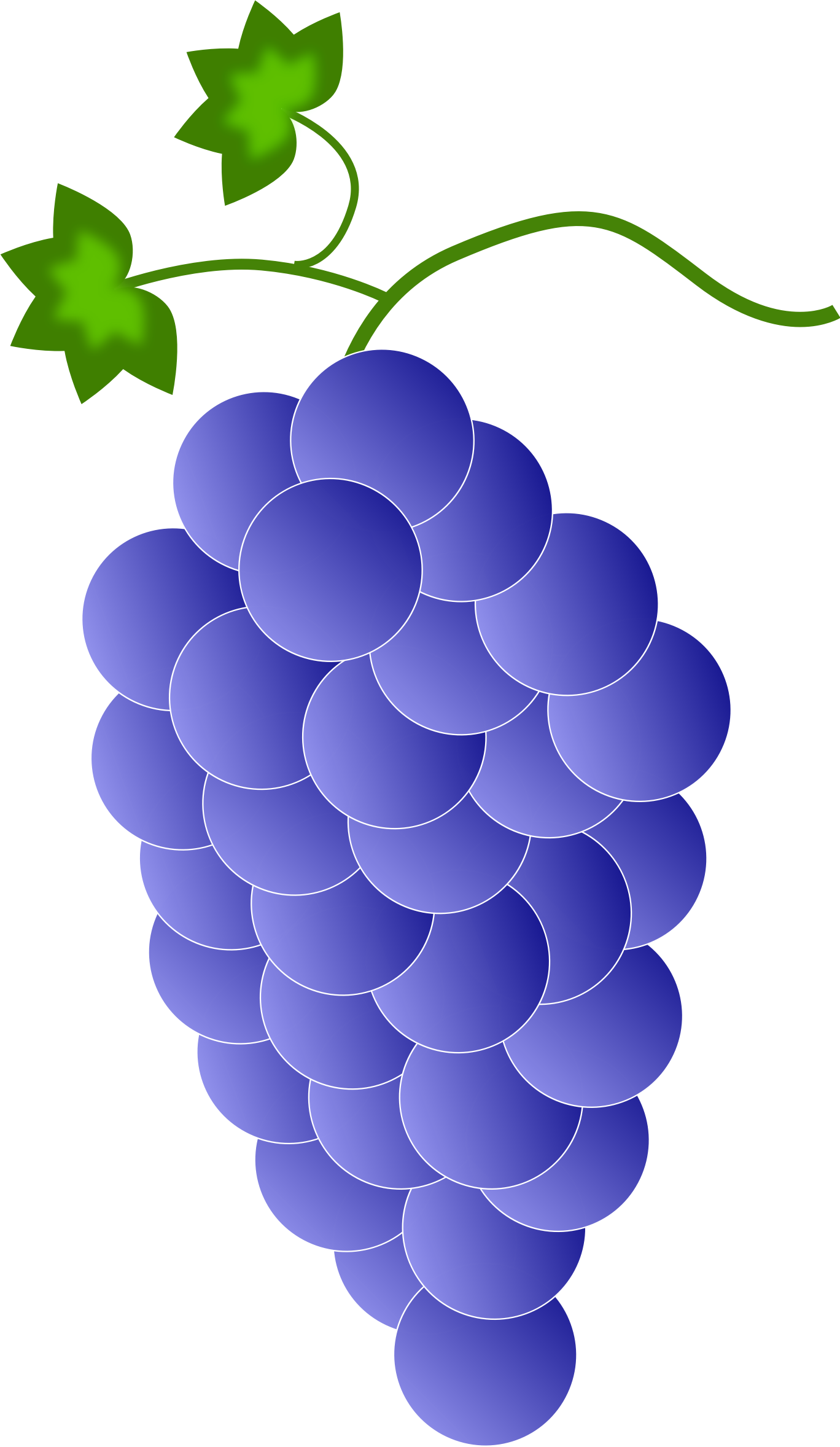 Colored Grapes - Violet \ Blue by Astro