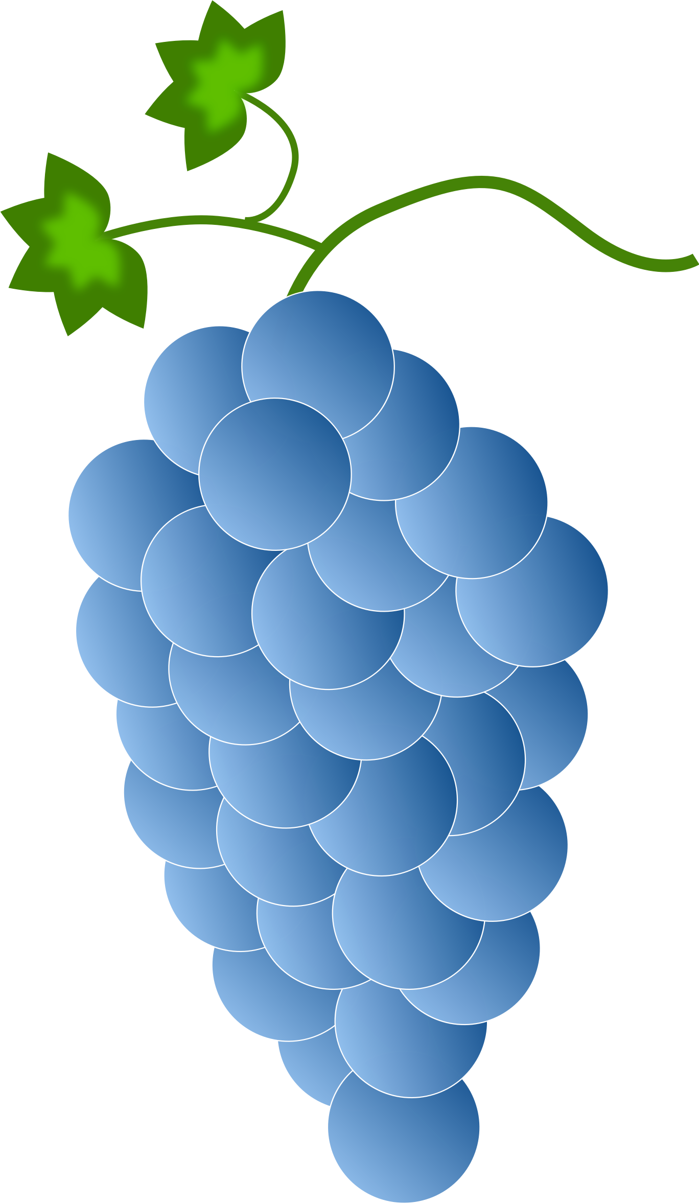 blue grapes by Astro