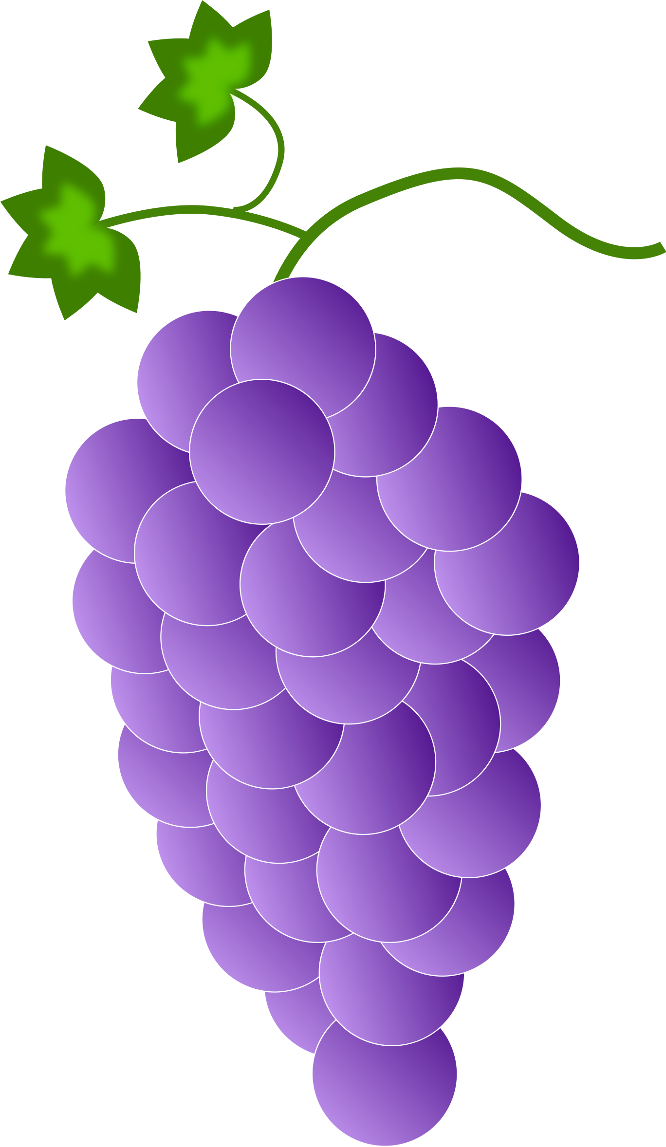 purple grapes by Astro