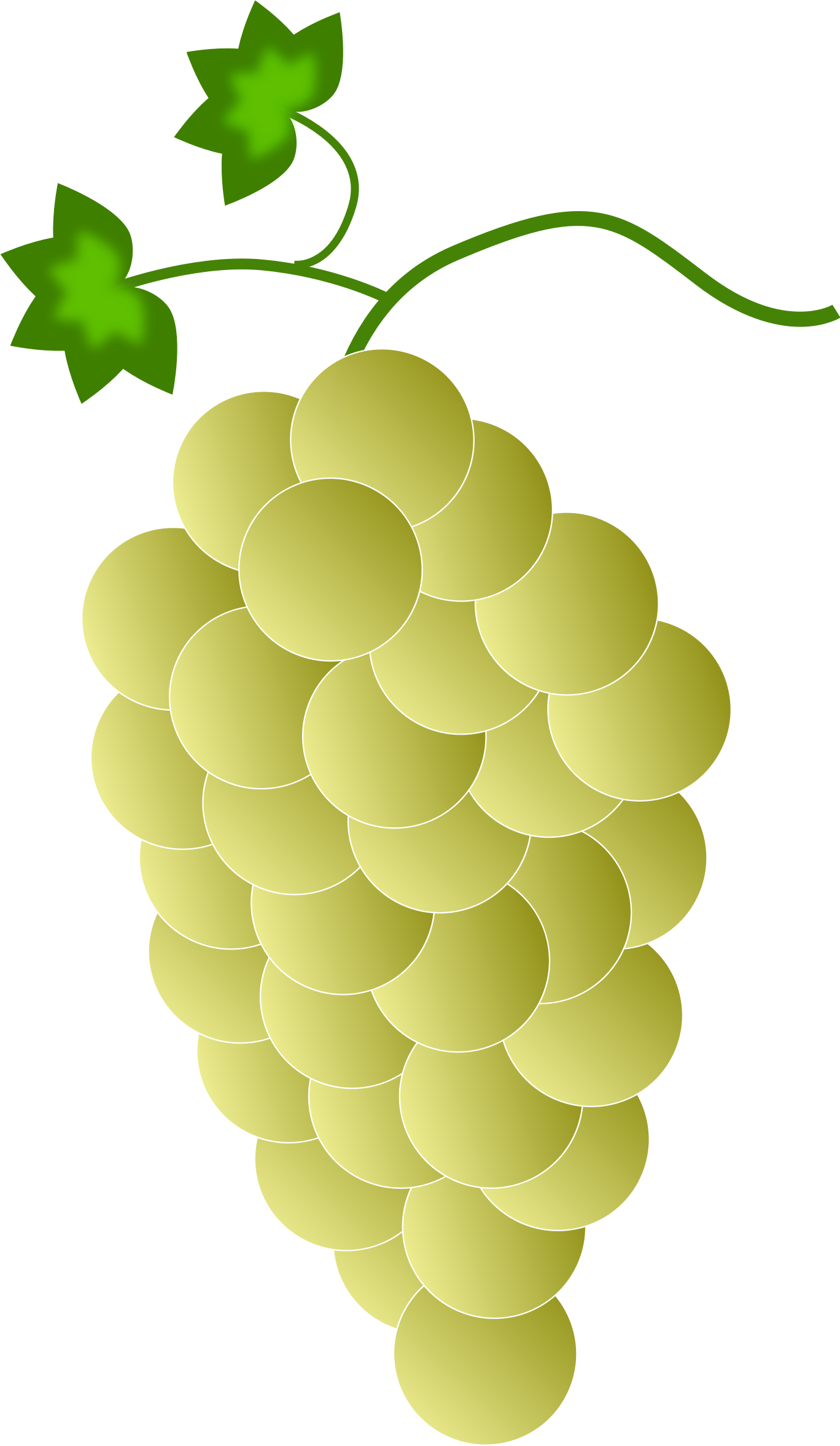 yellow grapes by Astro