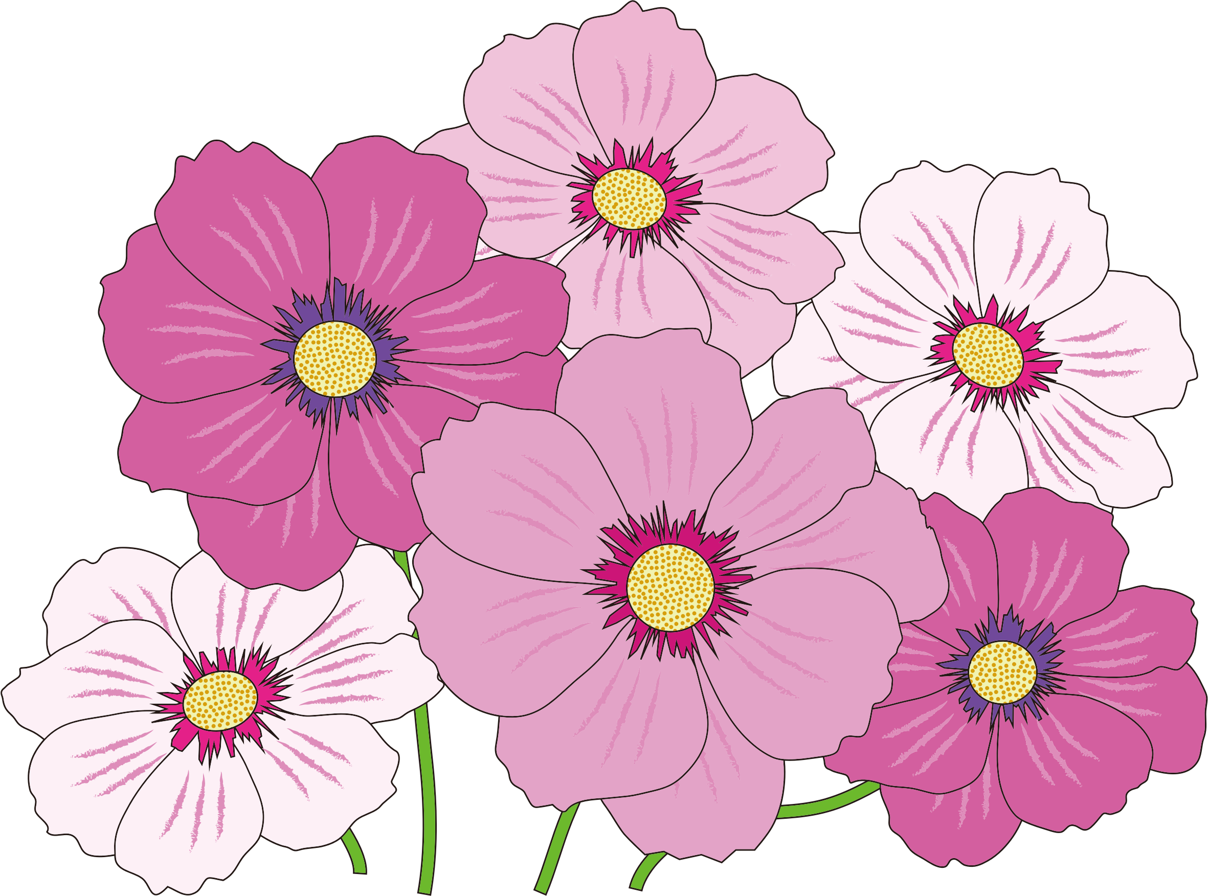 Clipart Pink And White Flowers