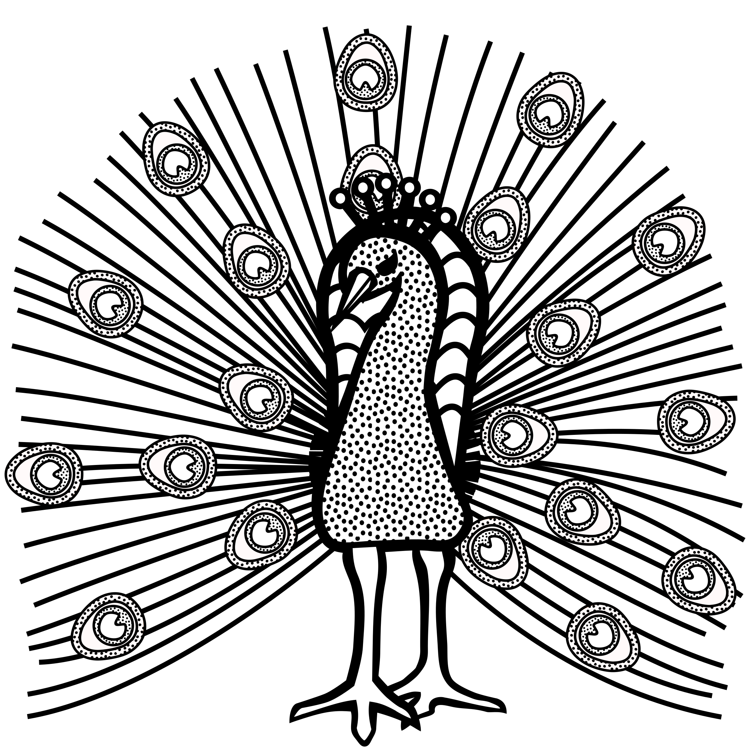 peacock - lineart by frankes
