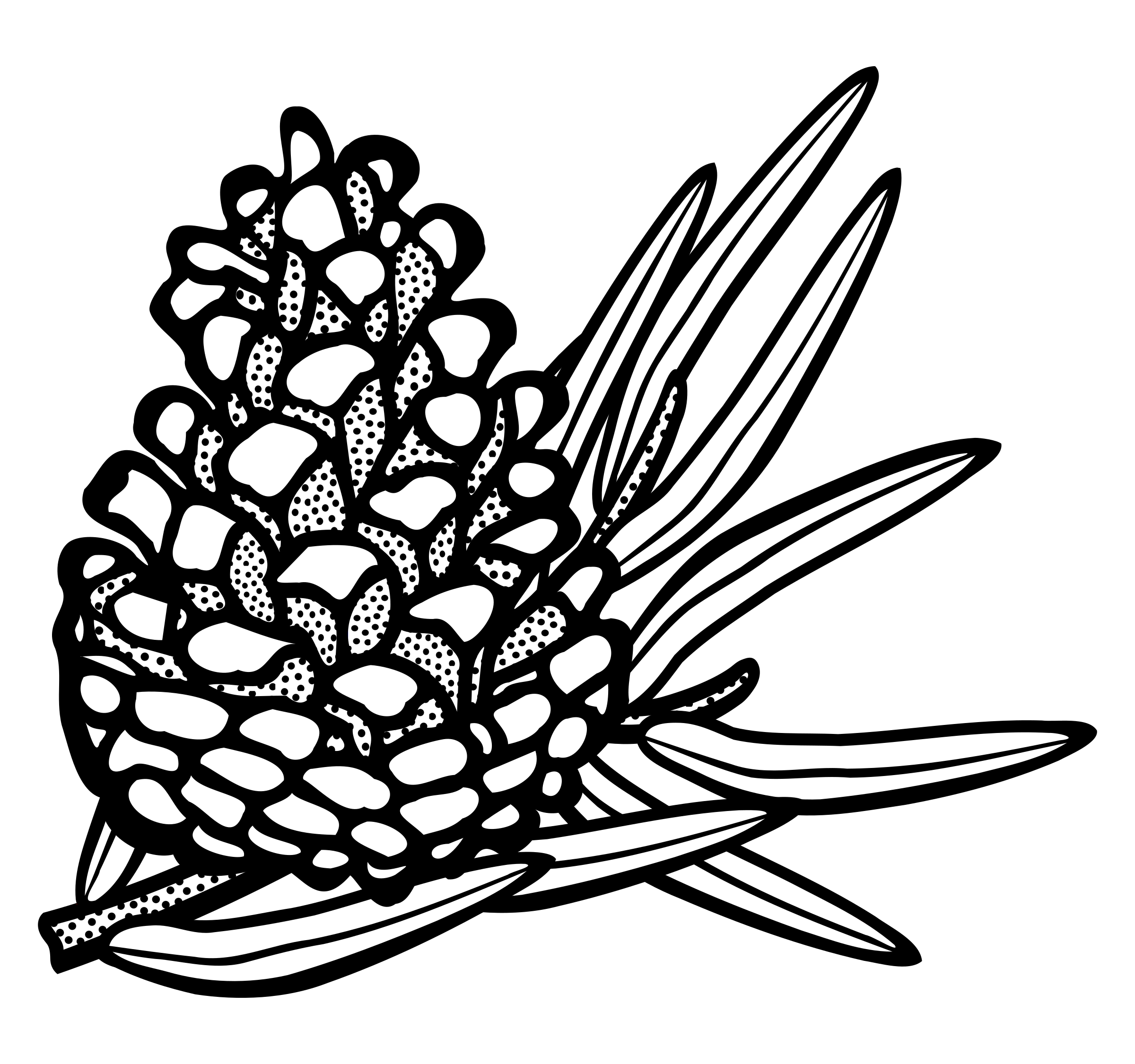 conifer cone - lineart by frankes