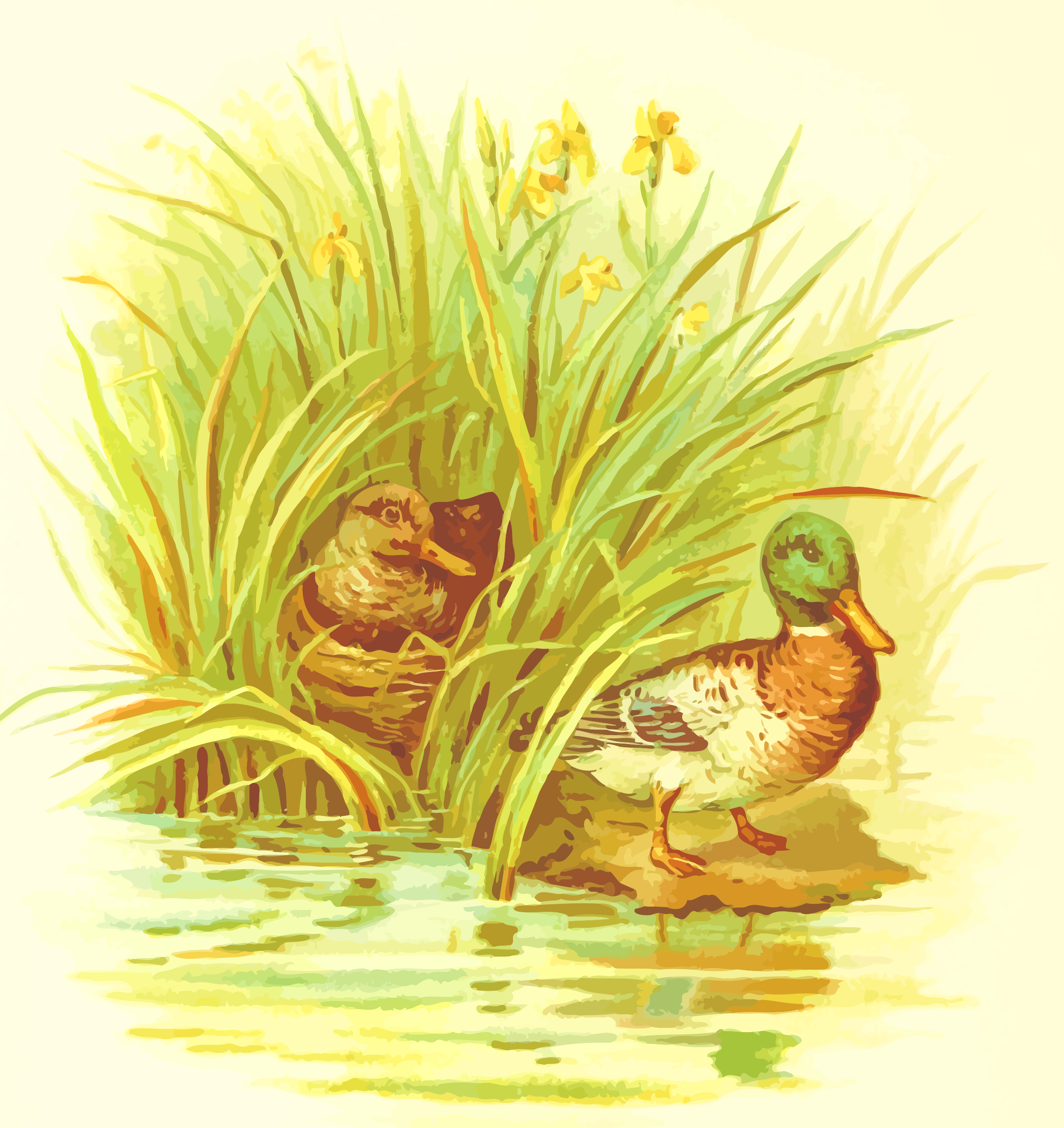 Ducks nest by Firkin