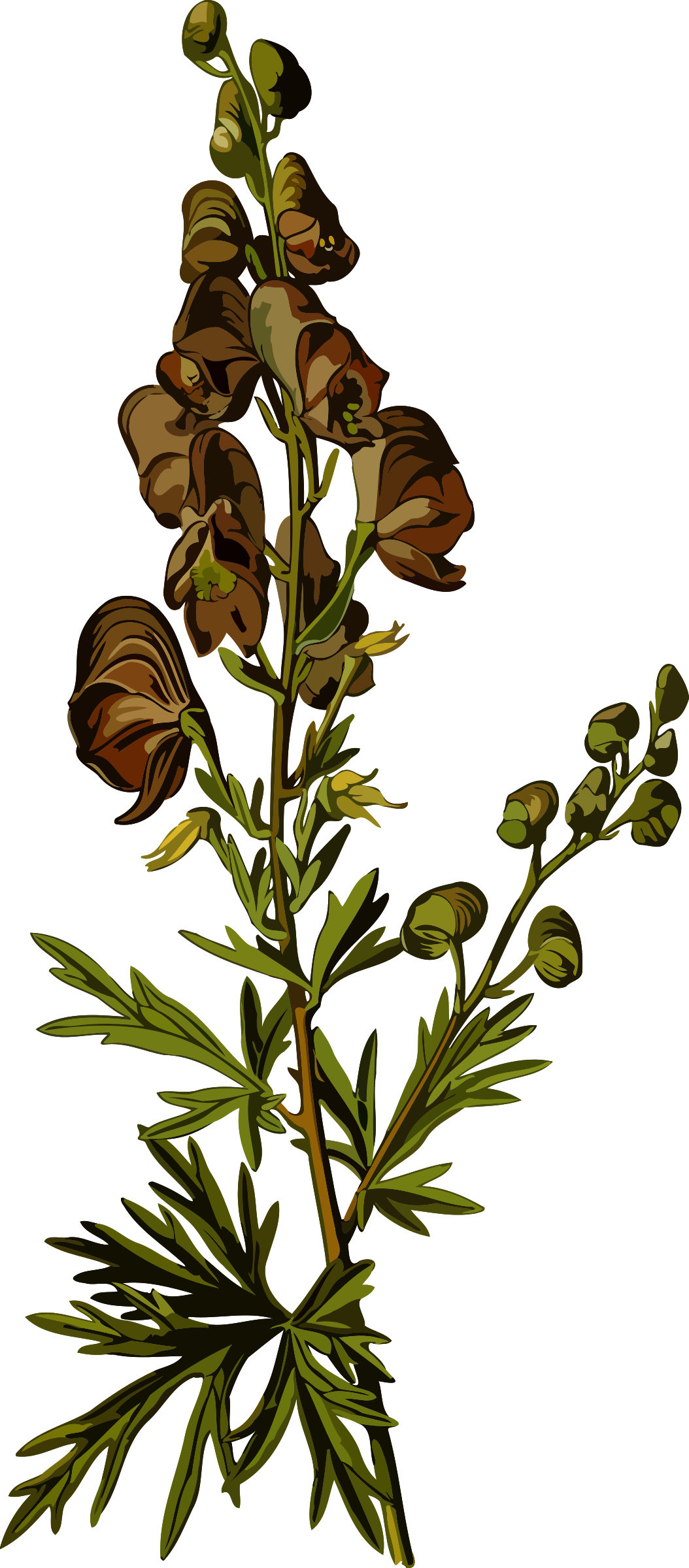 Wolfsbane (smaller file) by Firkin